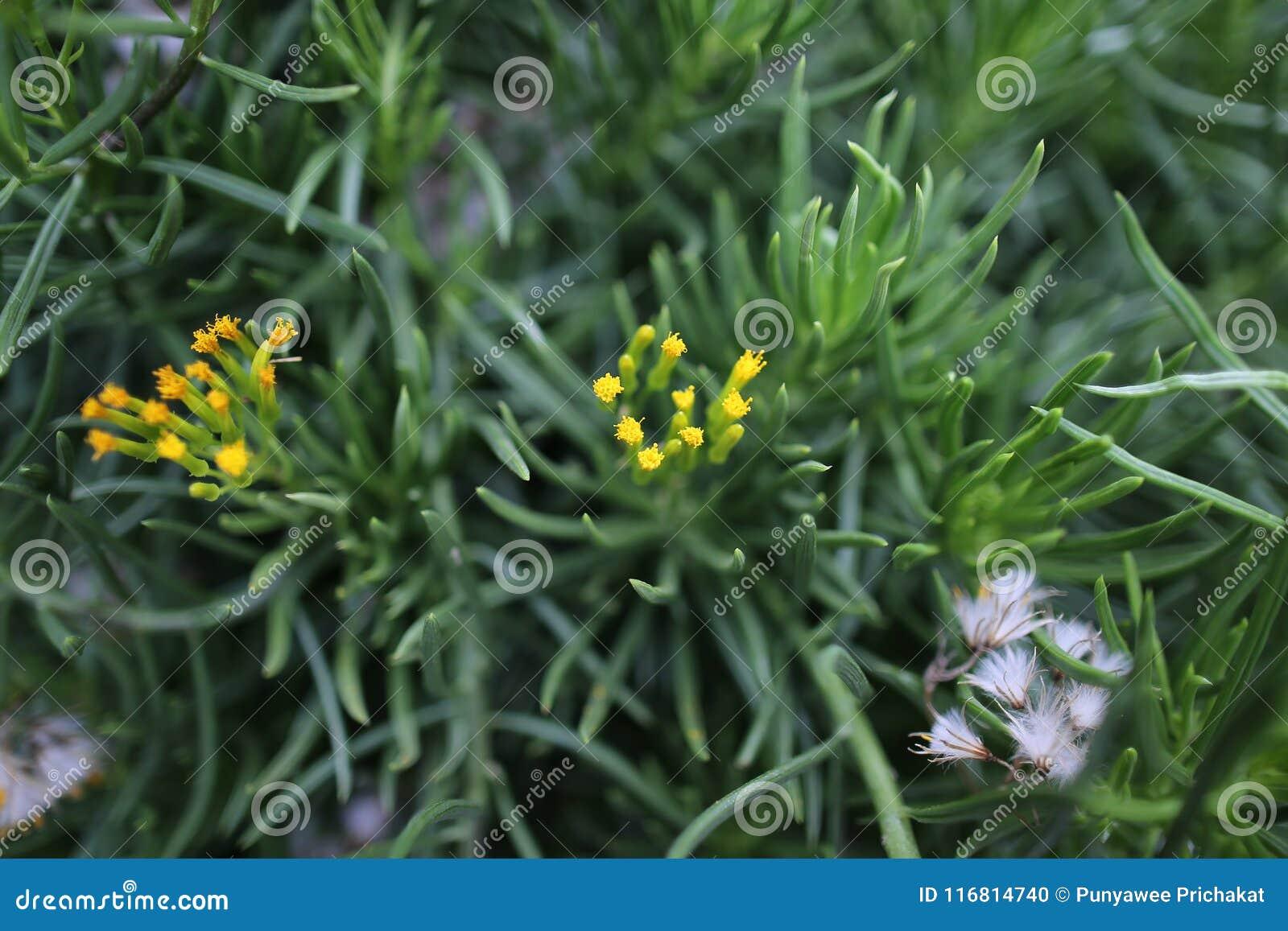 Fiori gialli molto piccoli