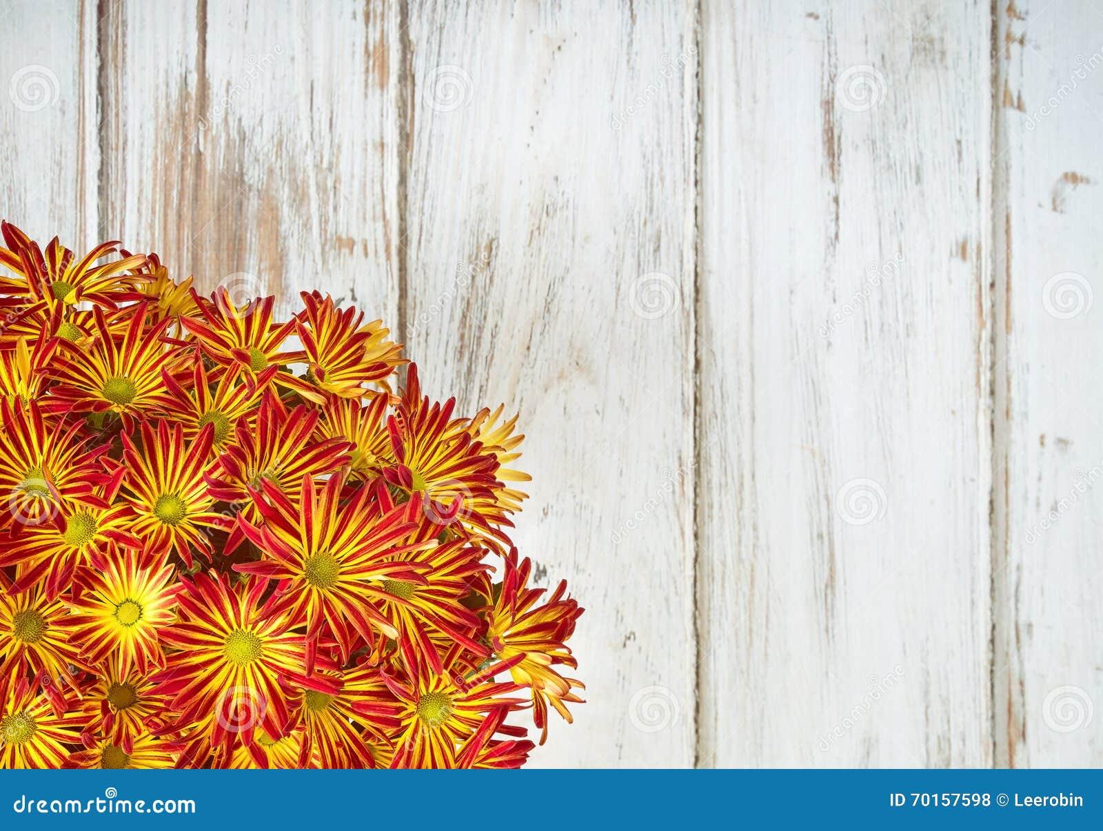 Fiori Gialli O Rossi.Fiori Gialli Rossi Del Crisantemo O Della Mummia Fotografia Stock