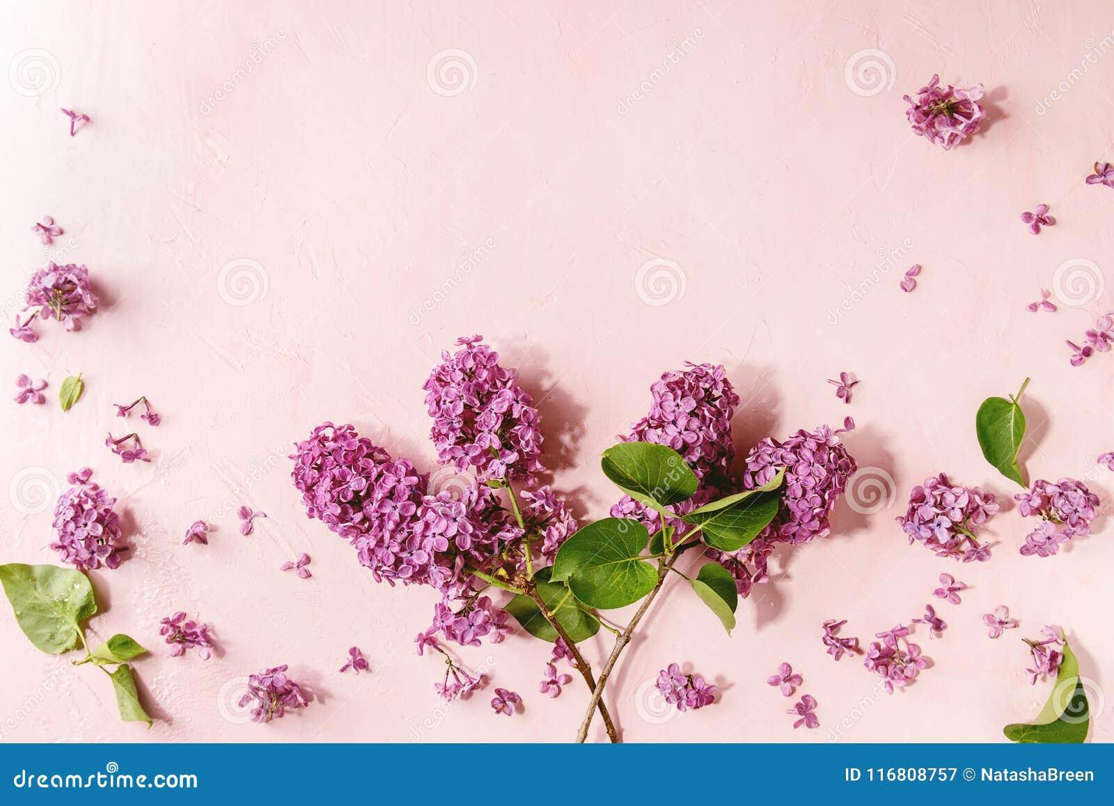 Fiori lilla sopra il rosa