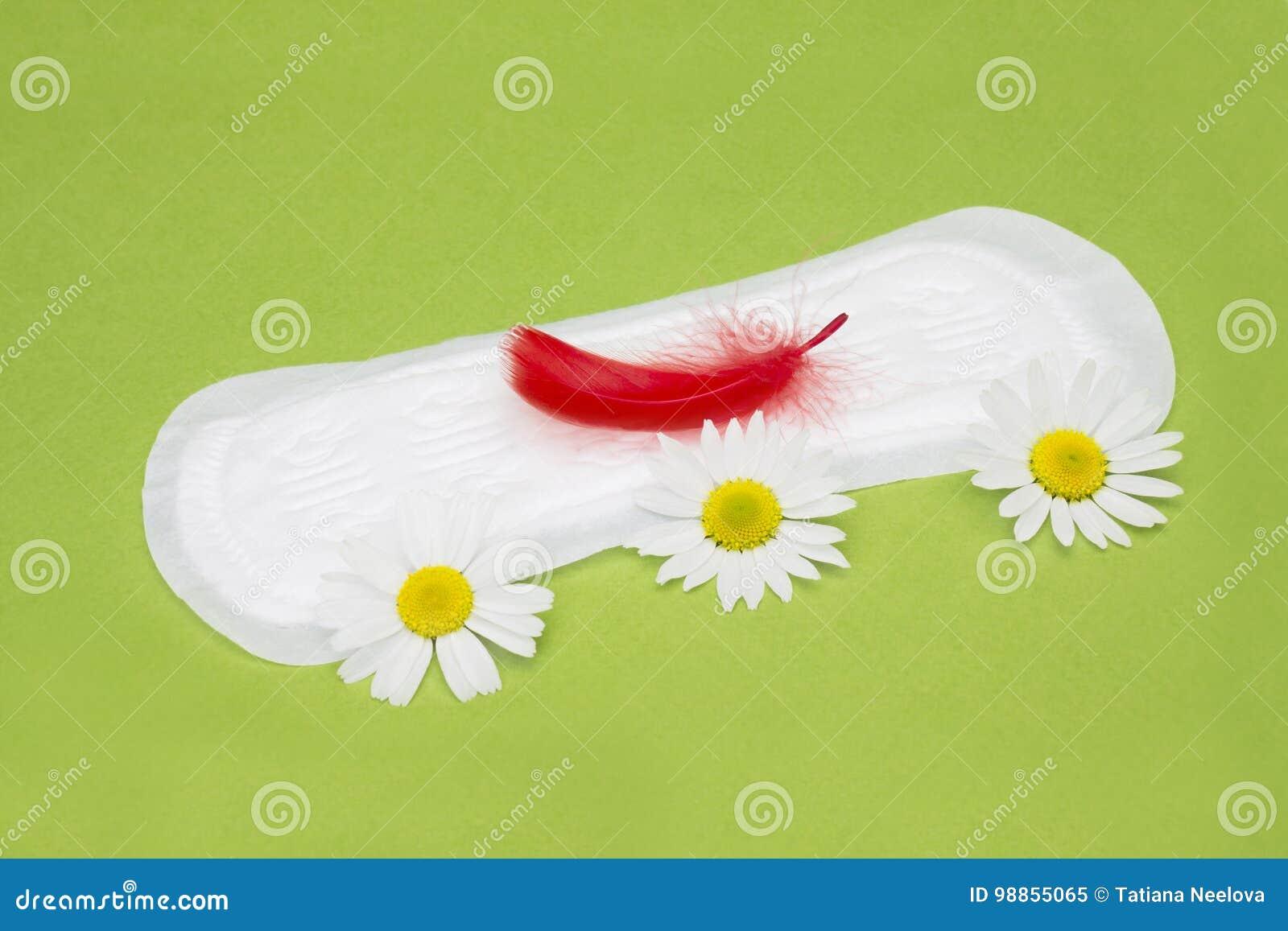 Fiori medicinali della camomilla e piuma rossa sul cuscinetto mestruale Igiene sanitaria della donna di mestruazione per il perio