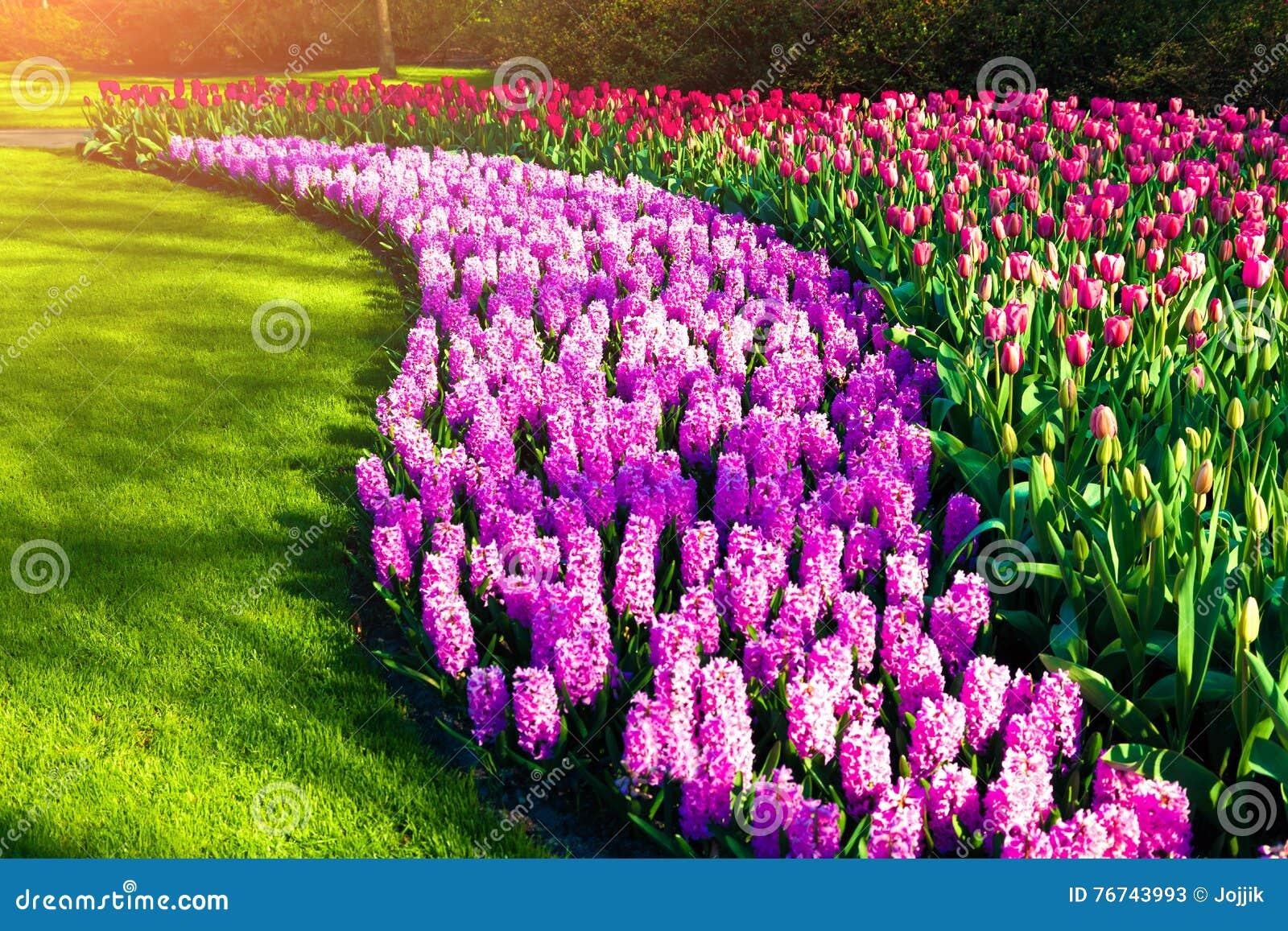 Fiori meravigliosi nei giardini di keukenhof fotografia for Giardini meravigliosi