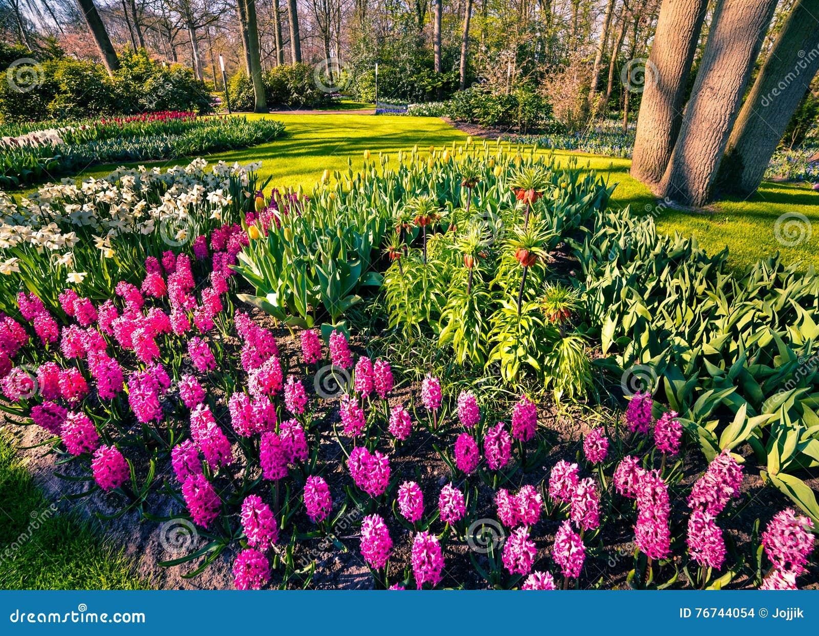 Fiori meravigliosi nei giardini di keukenhof fotografia for Laghetti nei giardini