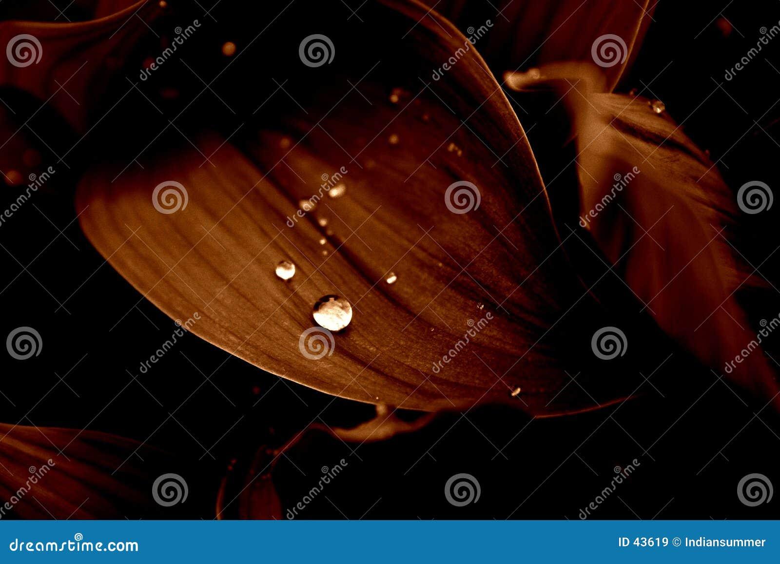 Fiori nella pioggia [2]