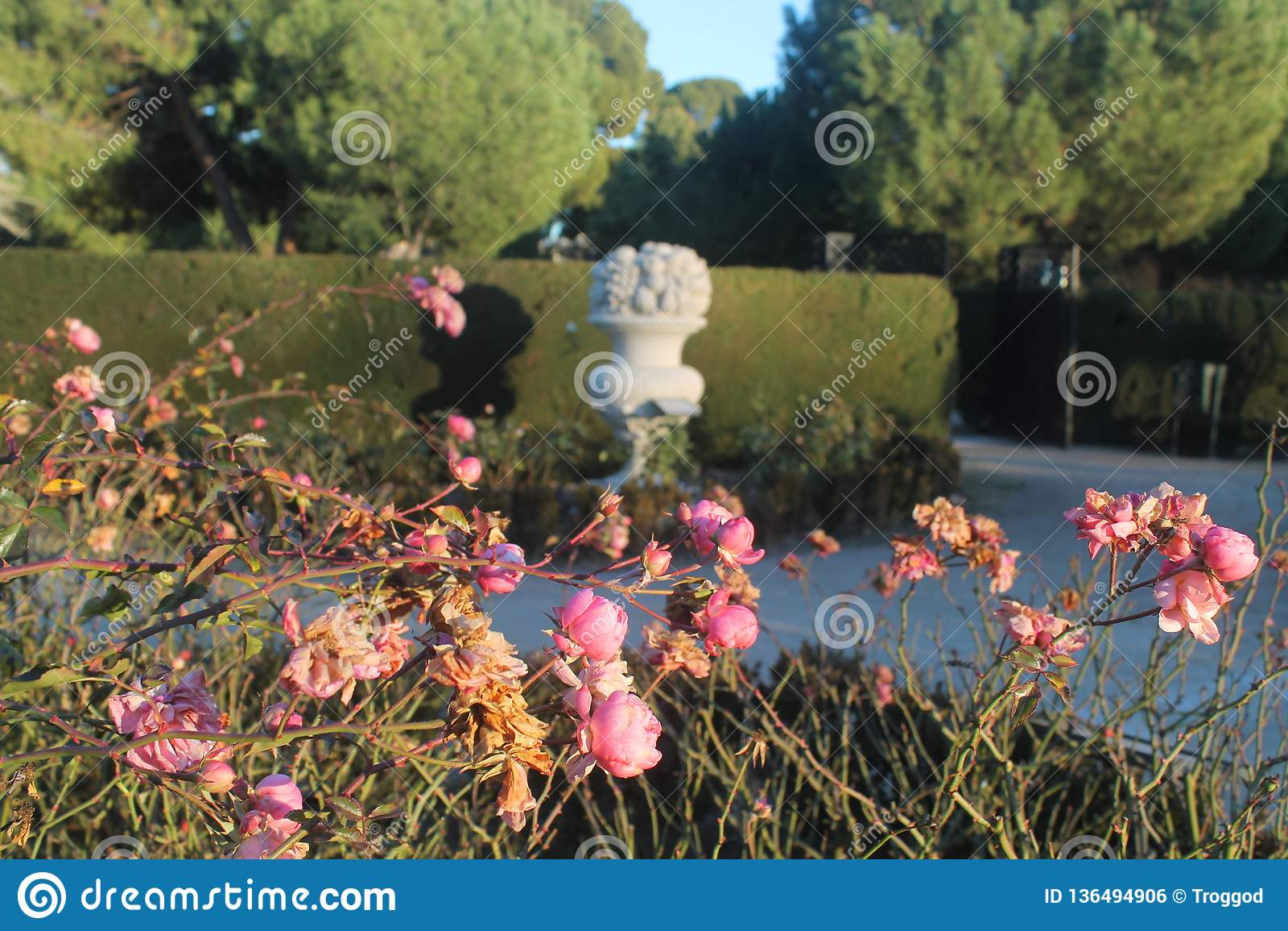 Fiori rosa con la statua nel fondo