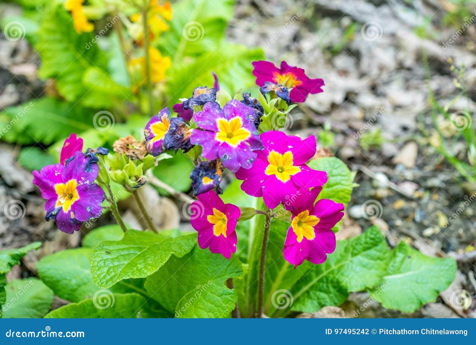 Fiori rosa in giardino verde