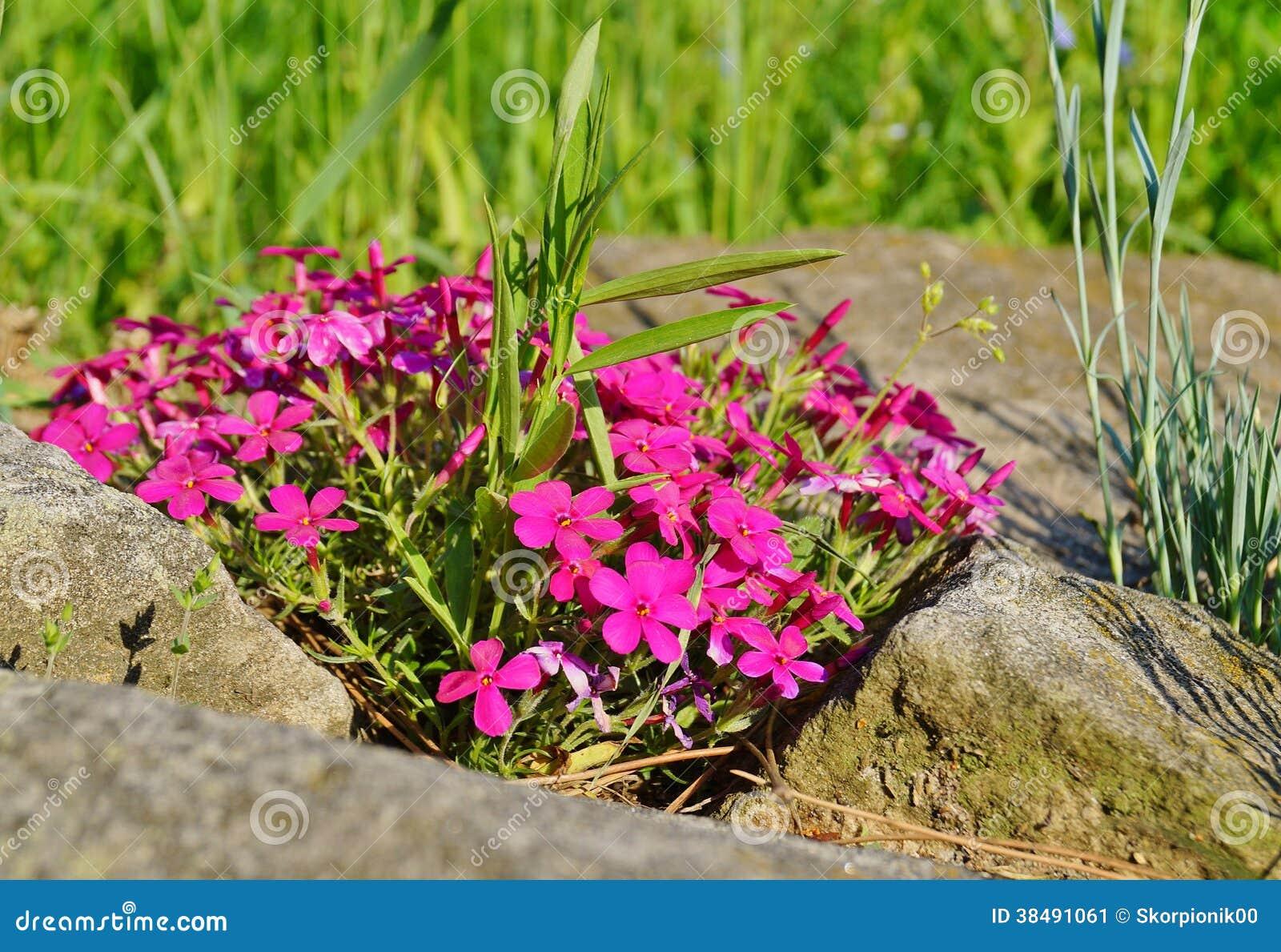 Fiori di primavera da giardino interno di casa for Rose da giardino