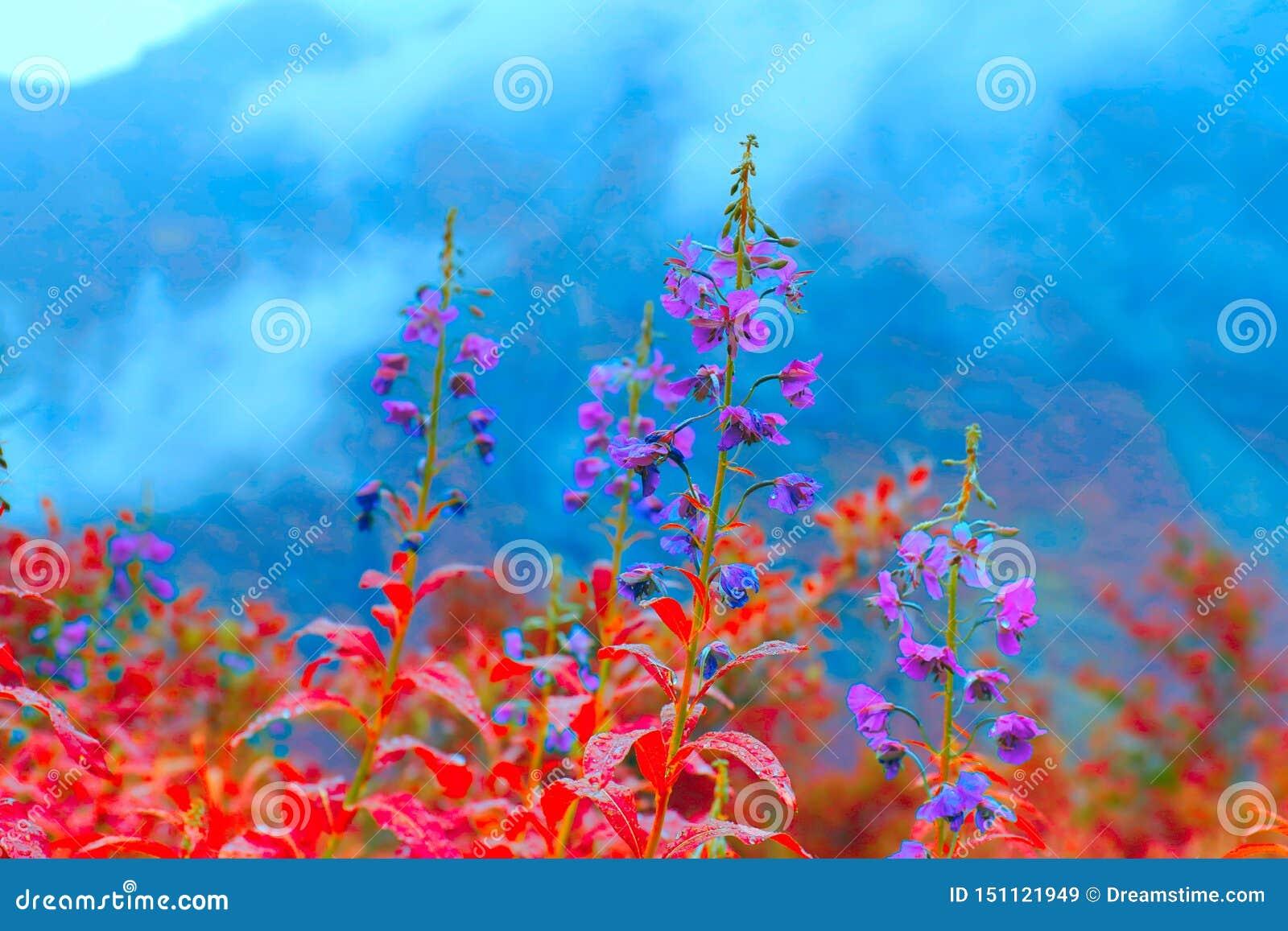 Fiori rossi e blu del medow nordico Bei fiori selvaggi colourful dagli altopiani