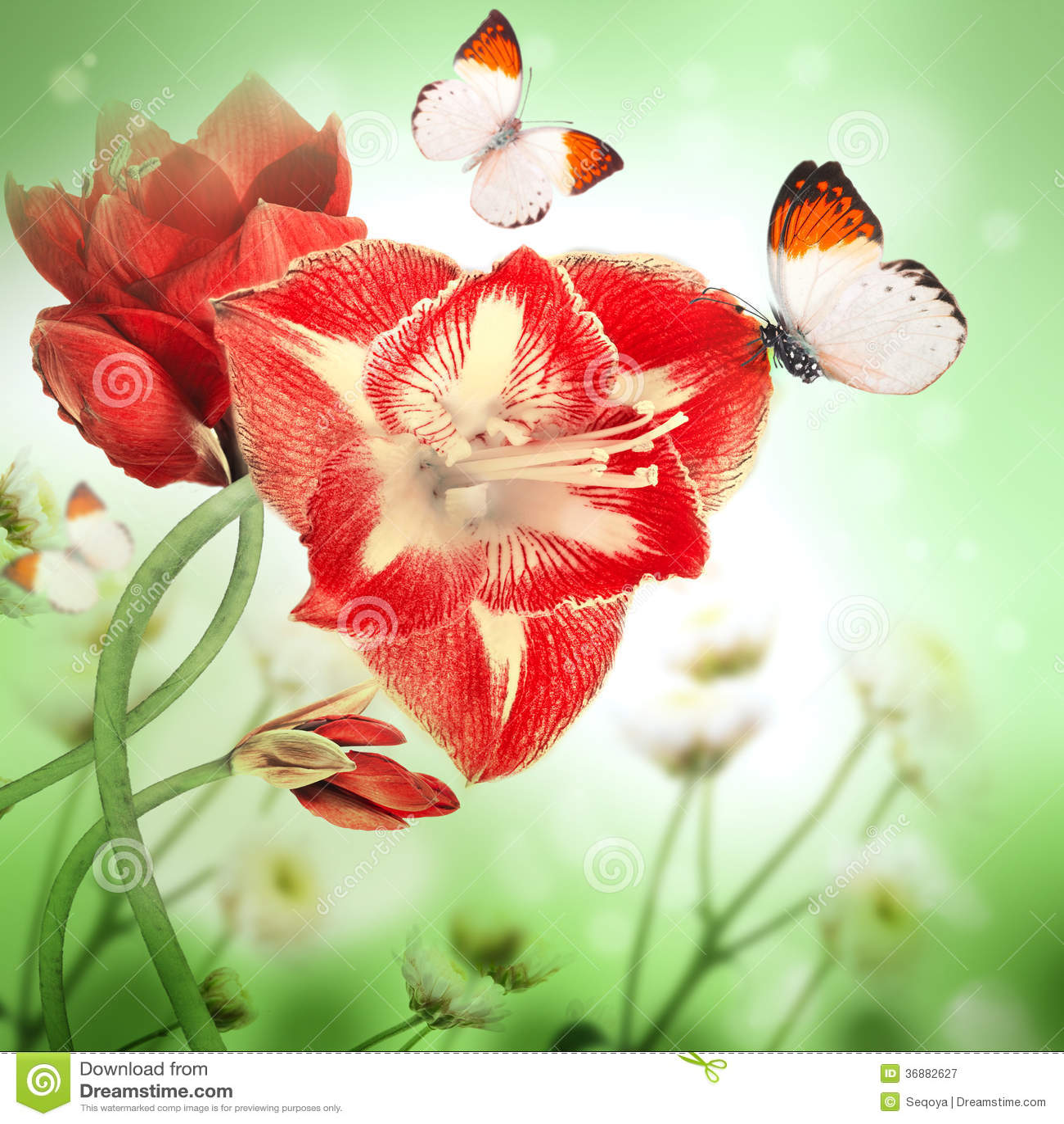 Download Fiori rossi, mazzo immagine stock. Immagine di grunge - 36882627