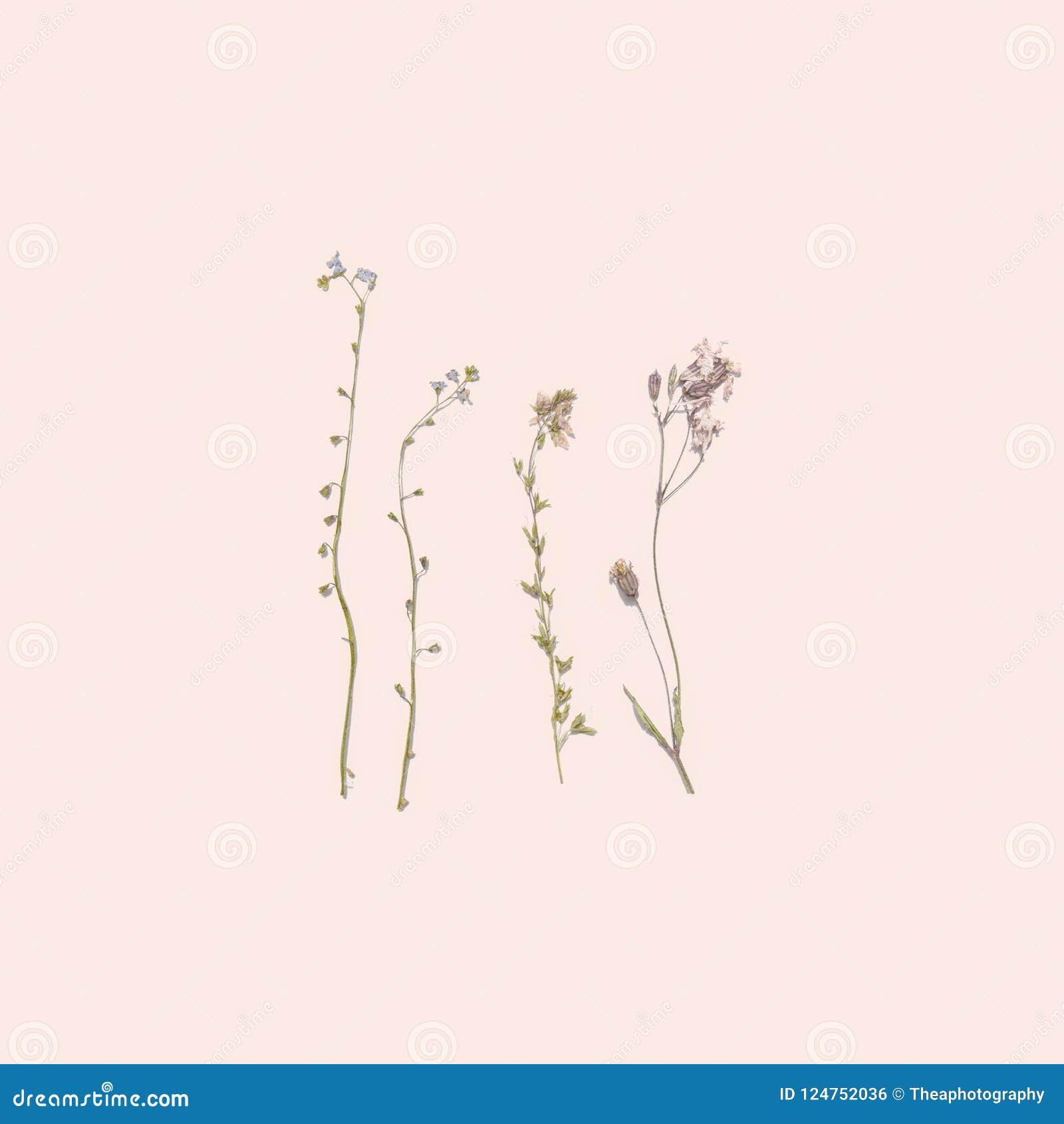 Fiori secchi di estate su fondo rosa