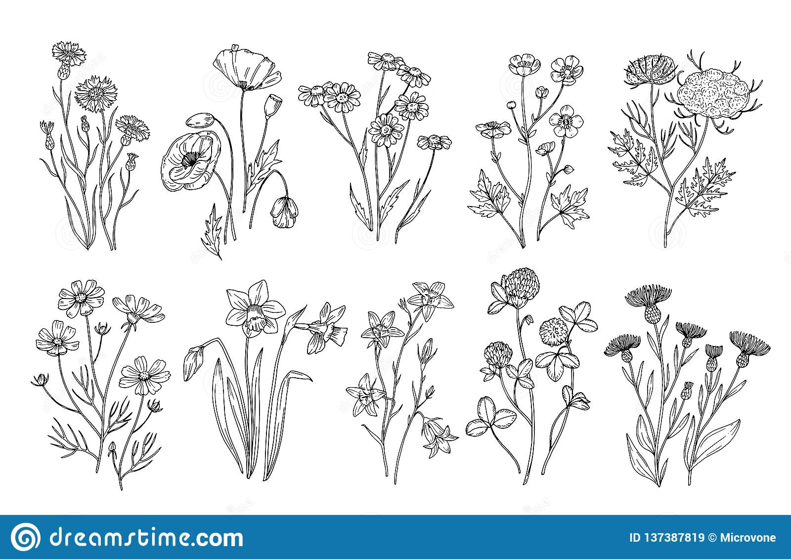 Fiori selvaggi Elementi botanici della natura dei wildflowers e delle erbe di schizzo Insieme di fioritura di vettore del campo d