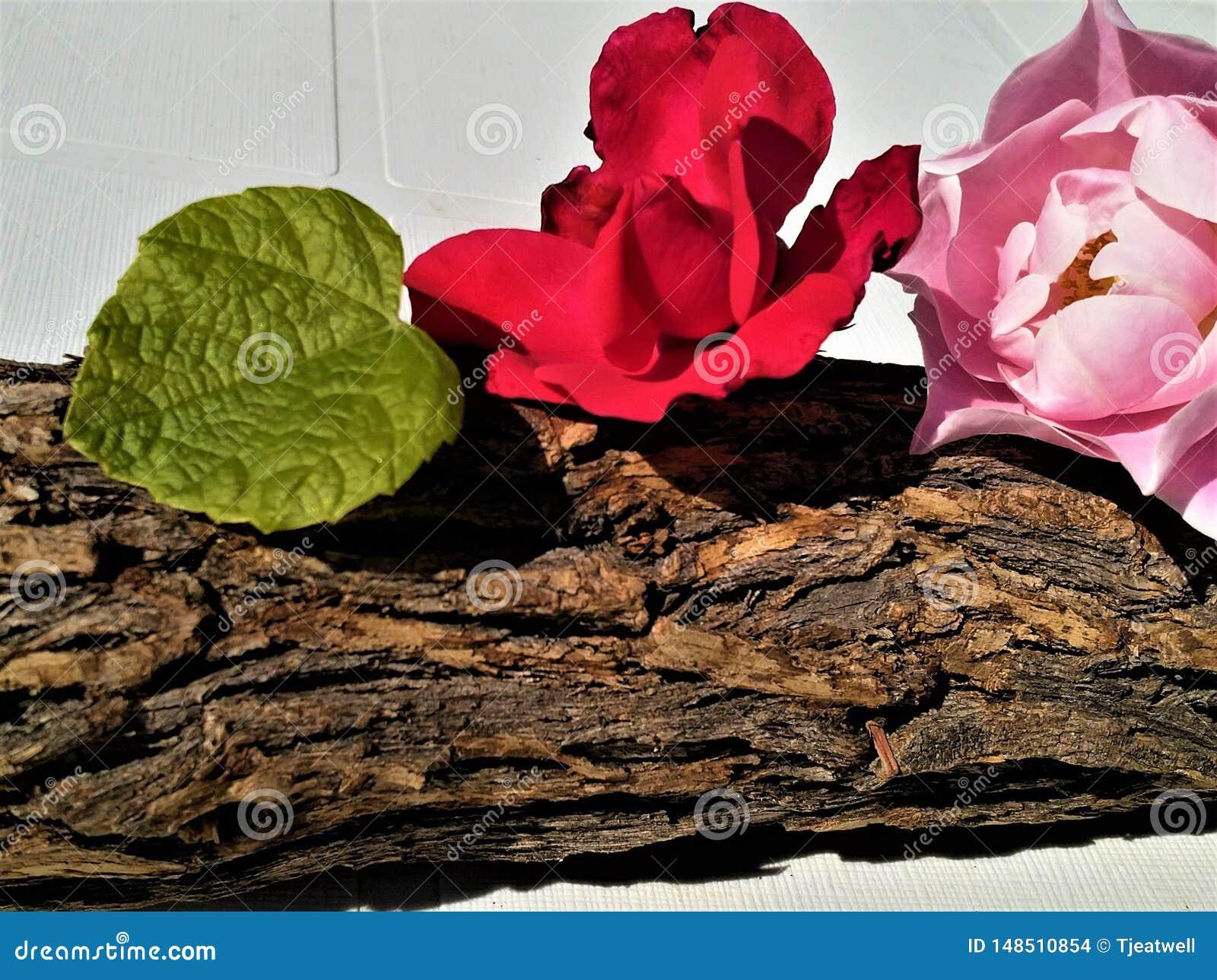 Fiori su una corteccia di legno