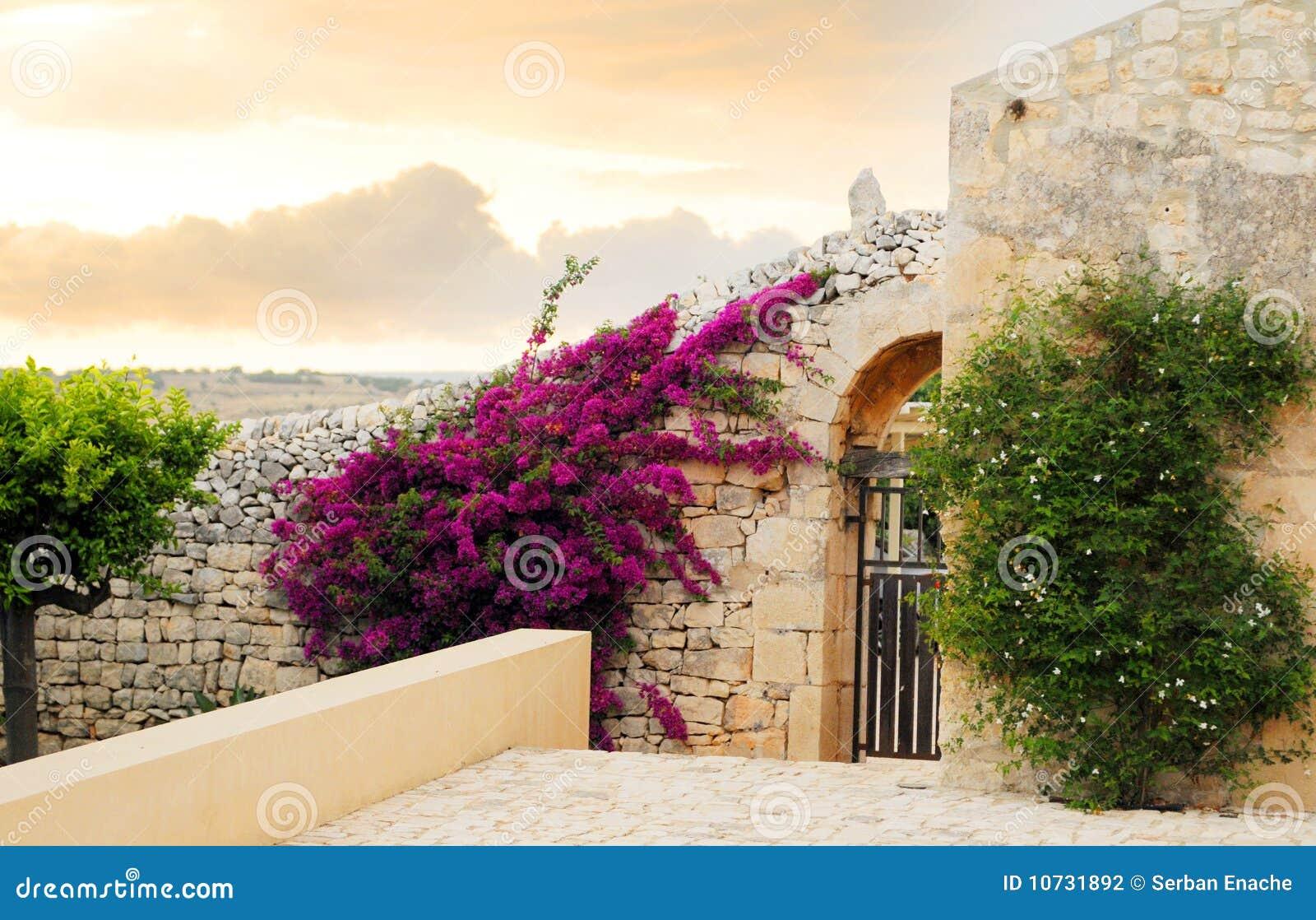 Fiori sulla parete domestica