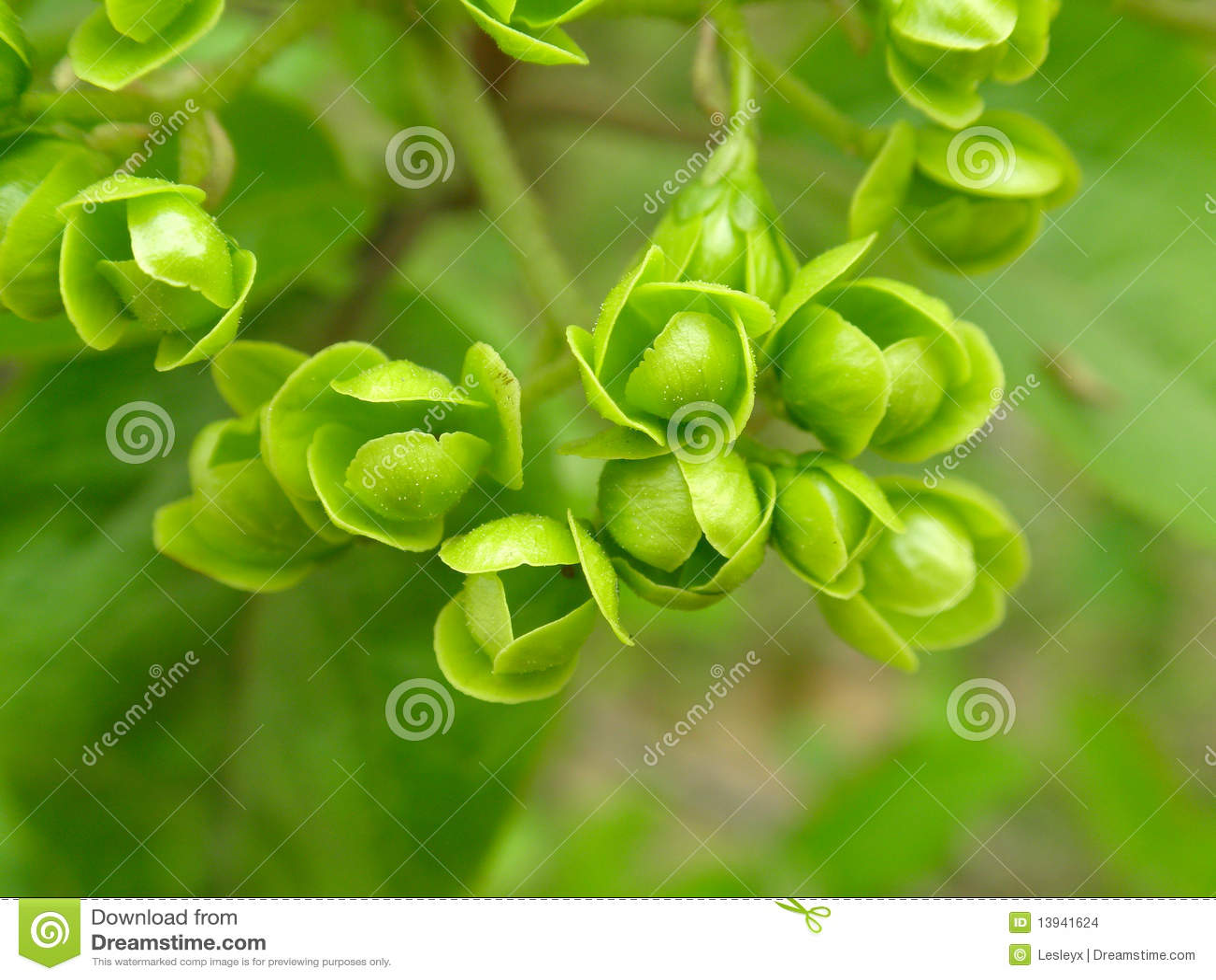 Fiori Verdi Immagini Stock - Immagine: 13941624