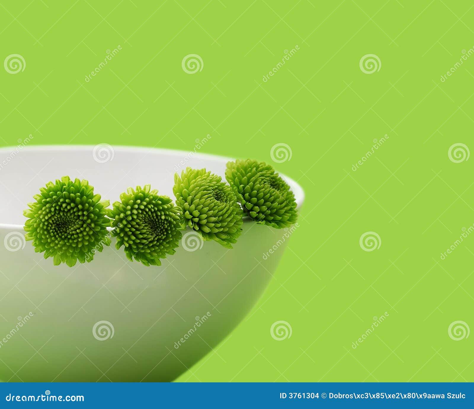 Fiori verdi fotografia stock immagine di colorful verde for Fiori verdi