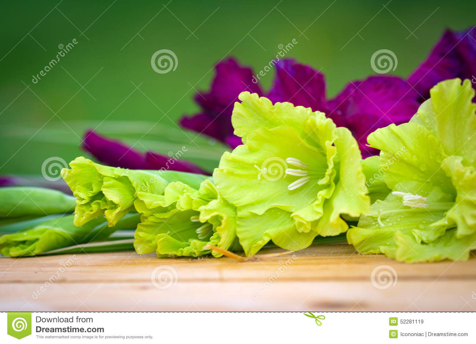 Fiori verdi e viola di gladioli fotografia stock for Fiori verdi