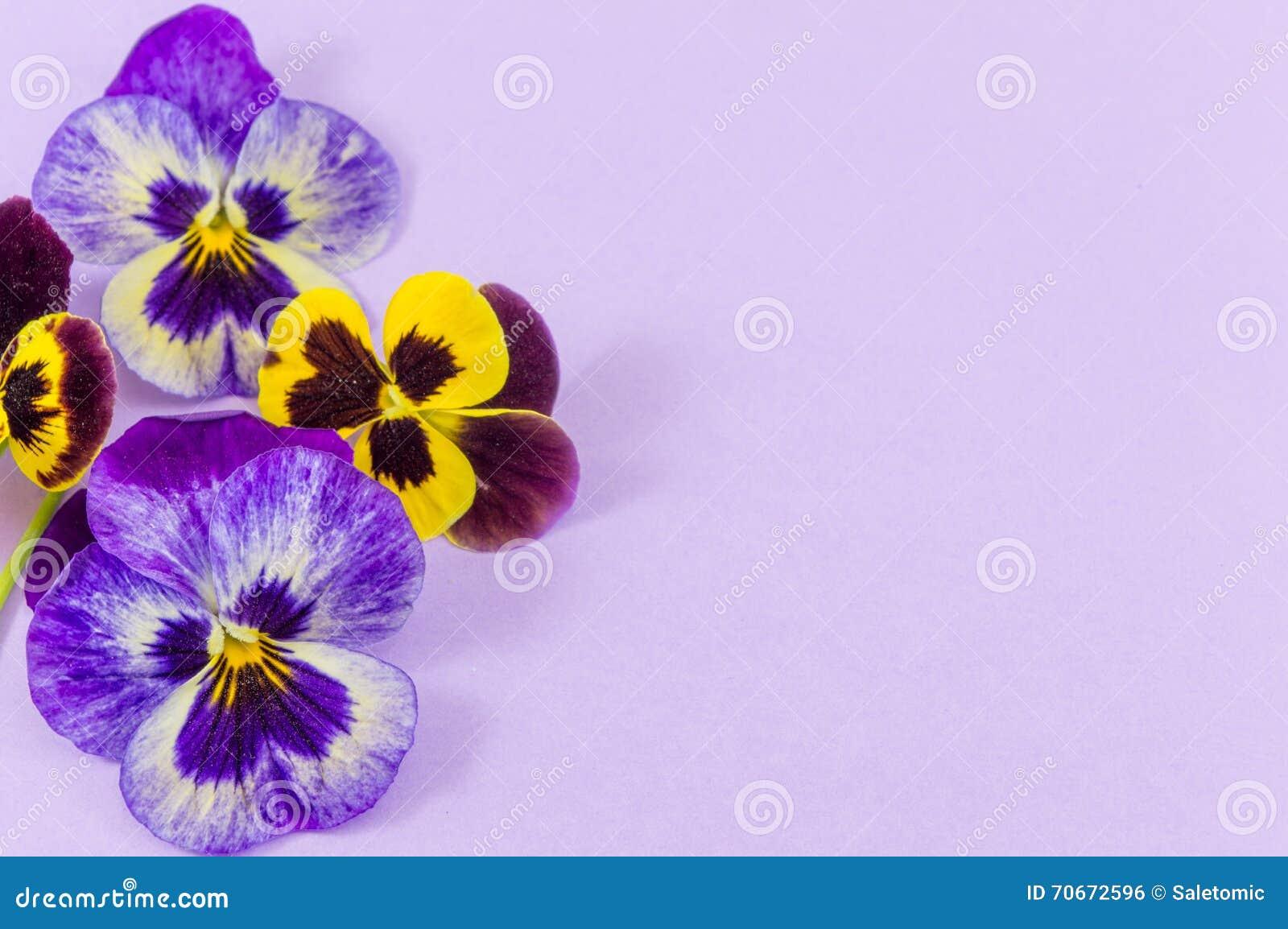 Fiori Viola Gialli.Fiori Viola E Gialli Fotografia Stock Immagine Di Blank 70672596