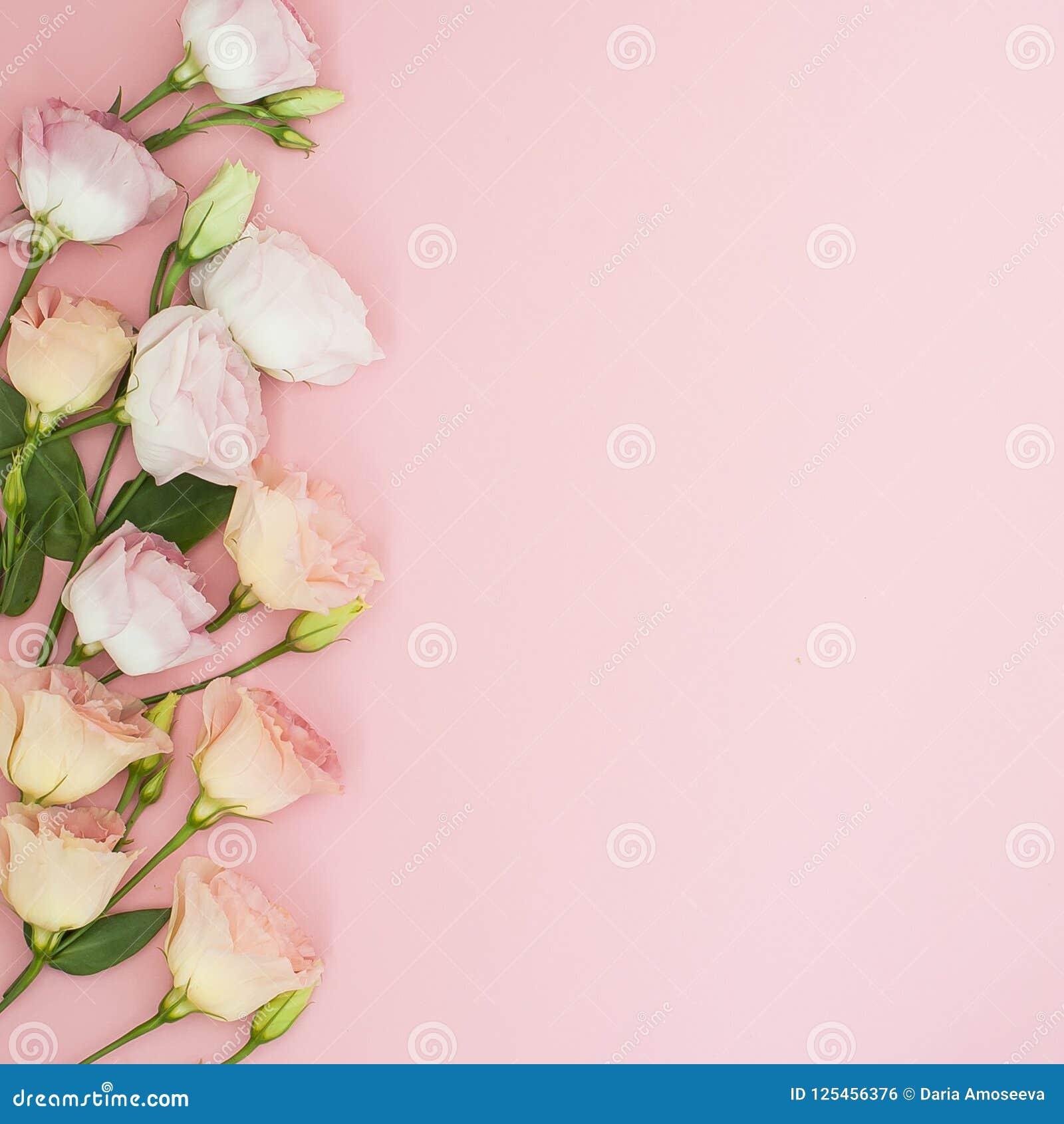 Fiorisce la composizione Pagina fatta dei fiori della rosa di rosa Disposizione piana, vista superiore, spazio della copia