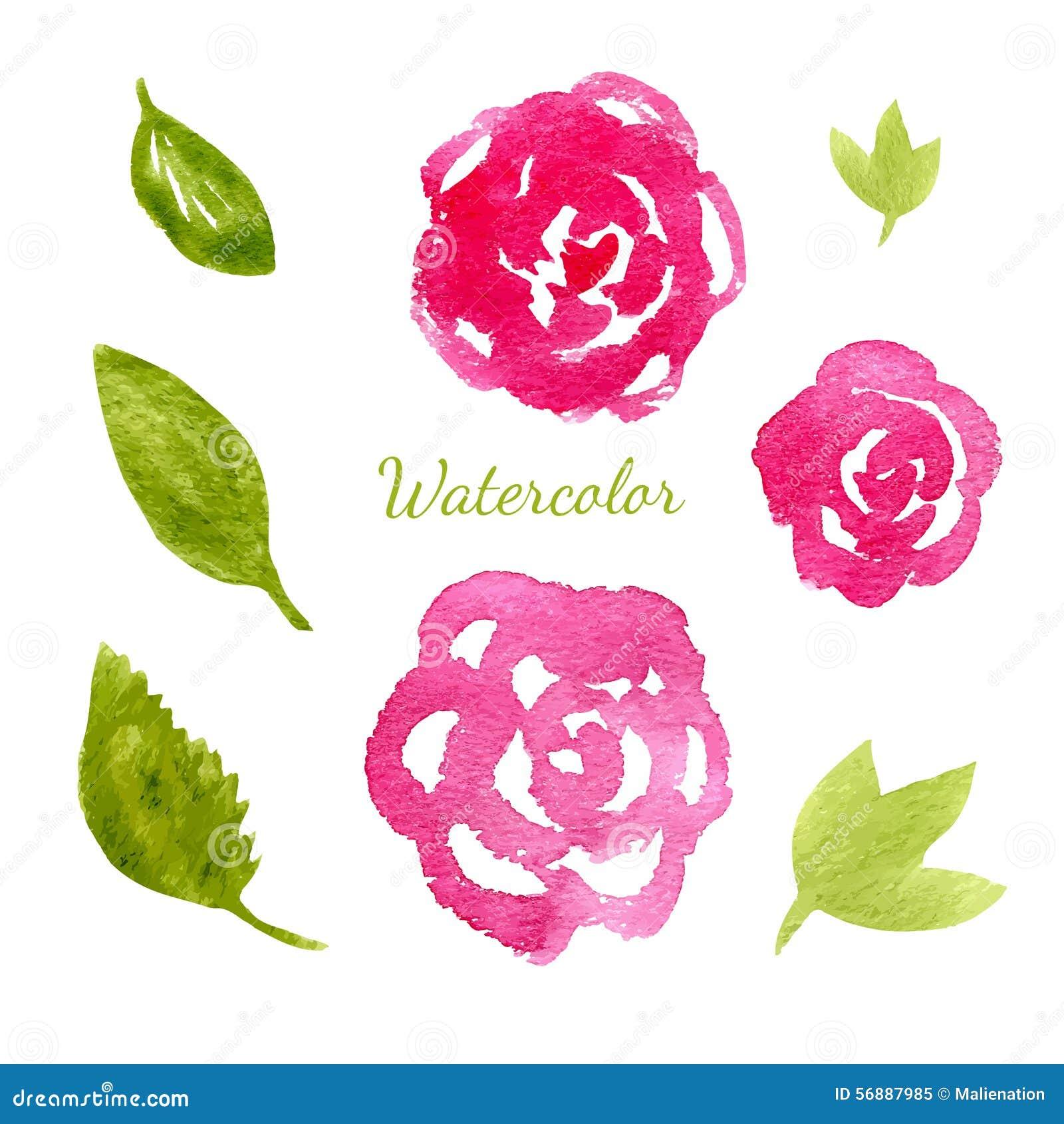 Fiorisce la raccolta dell acquerello Insieme di elementi delle foglie e dei fiori Illustrazione disegnata a mano di vettore per l
