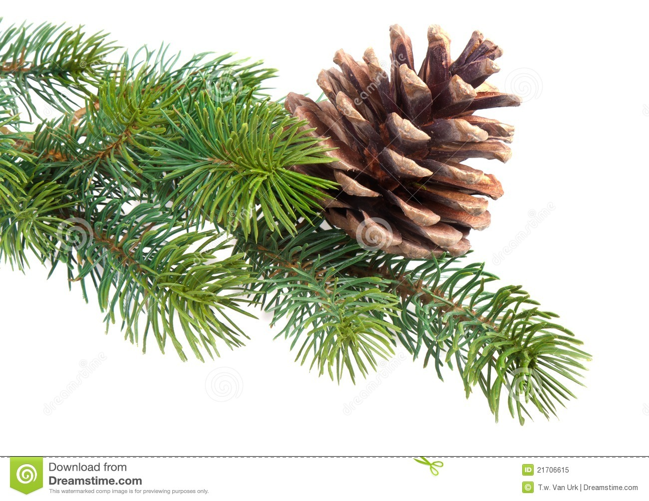 Fir Branch With Pine Cone Royalty Free Stock Photo - Image: 21706615