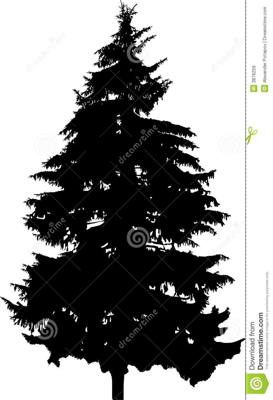 fir silhouette royalty free stock images image 3876259