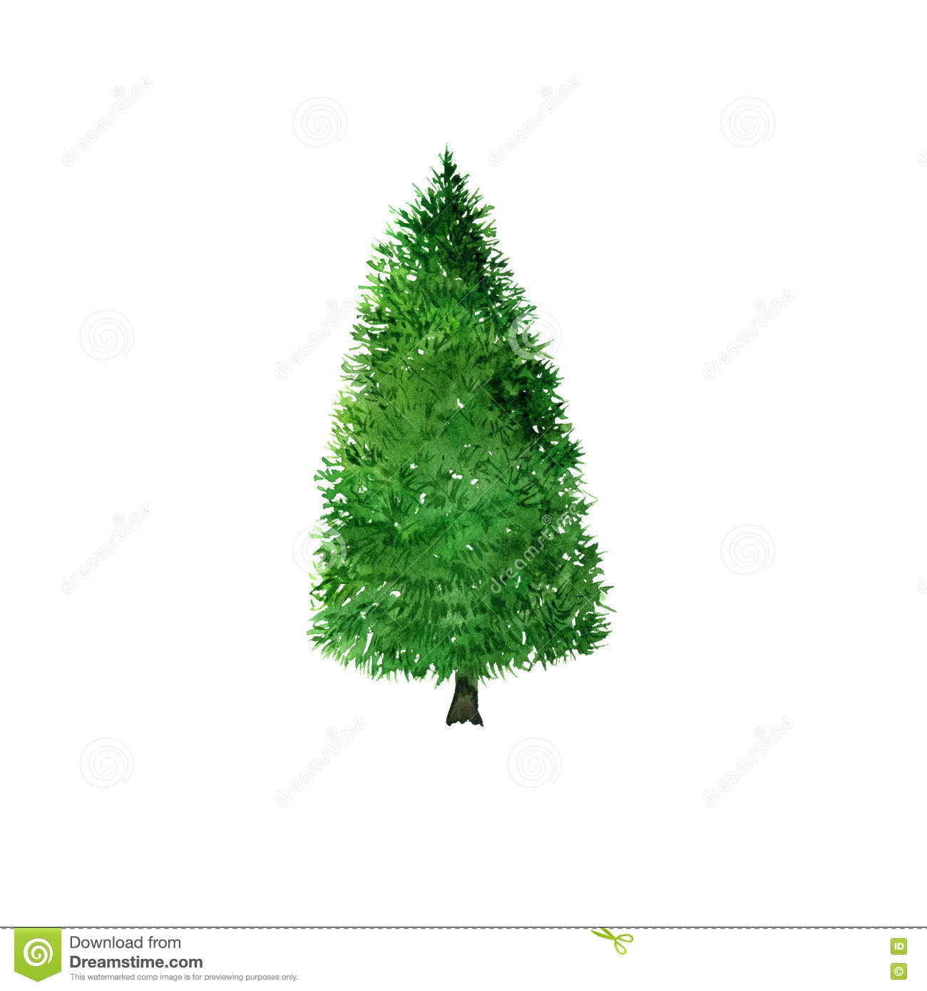 Fir Tree Drawing By Watercolor Stock Illustration - Illustration ... for Tree Drawing With Watercolor  18lpqdu