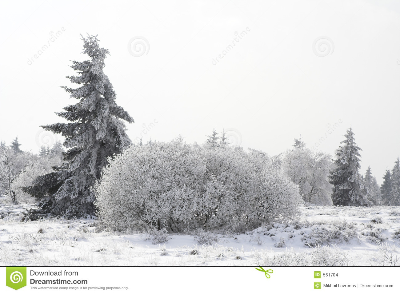 snowy fir trees forest - photo #4