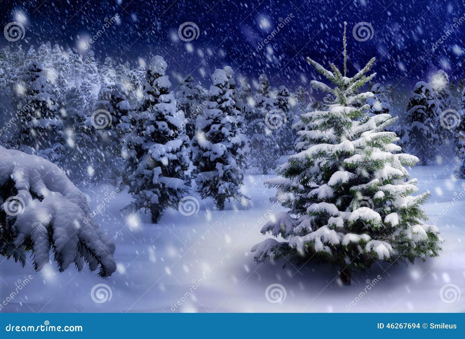 Fir Tree In Snowy Night Stock Photo Image 46267694