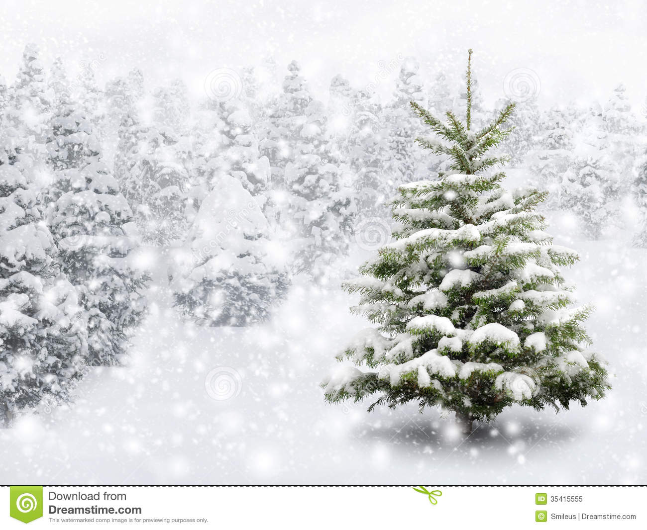 fir tree in thick snow stock image image of copyspace. Black Bedroom Furniture Sets. Home Design Ideas