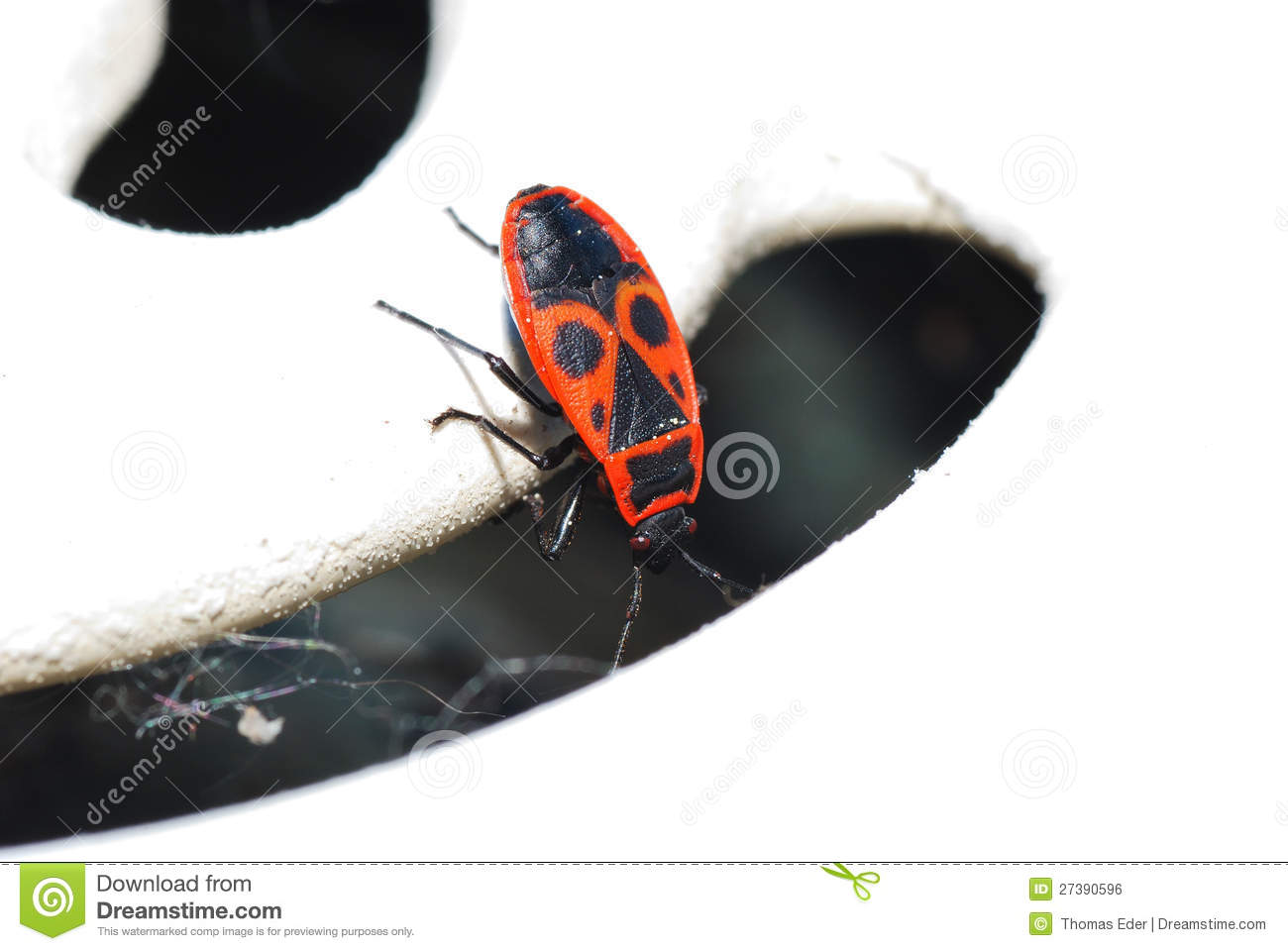 Fire Beetle Looks Royalty Free Stock Image Image 27390596