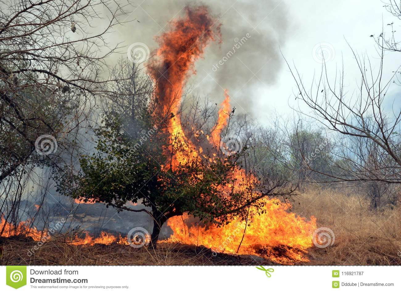 Fire in Bhopal editorial photography  Image of jungle - 116921787