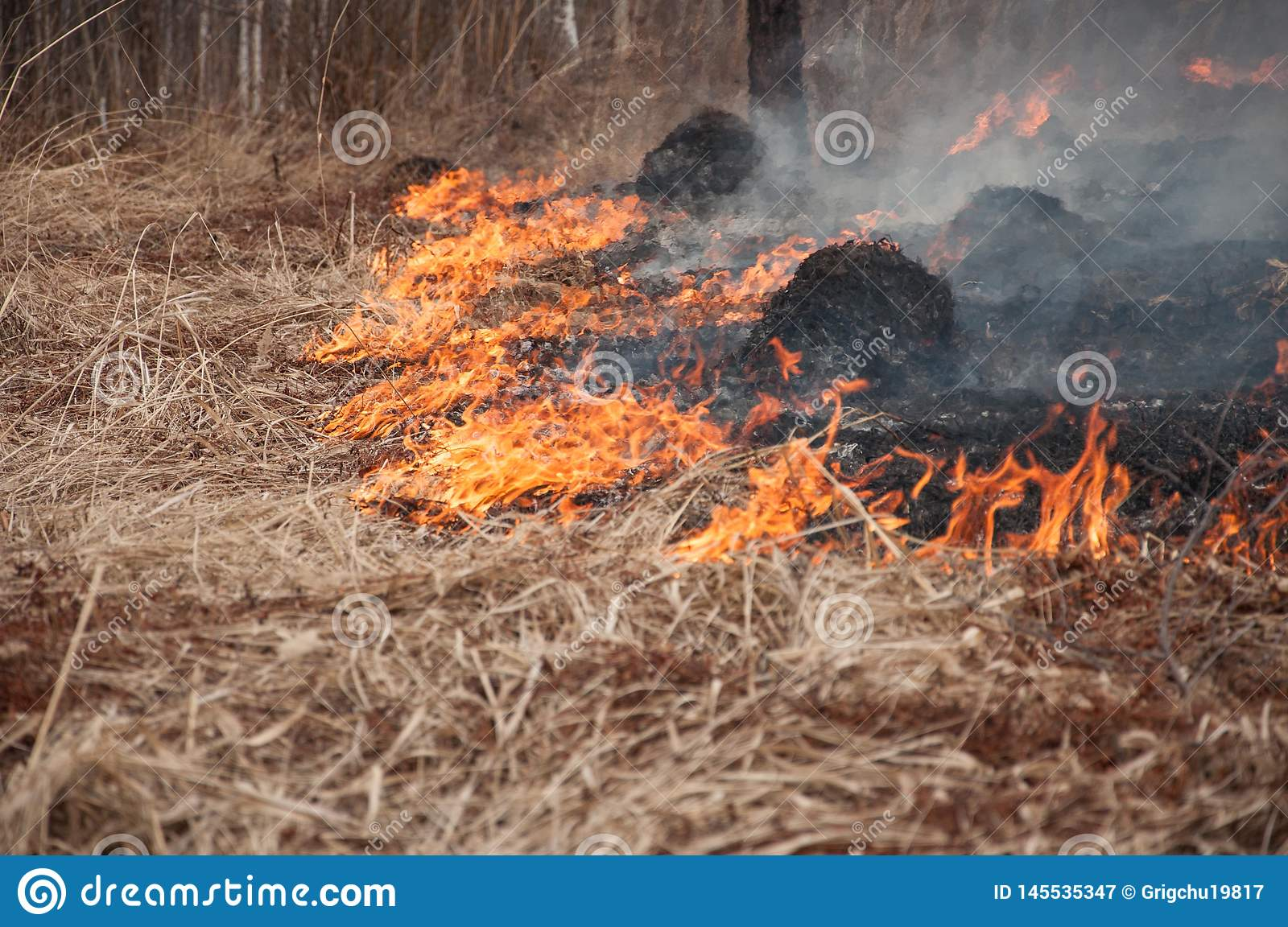 Fire on the dry grass. Forest pazhar.