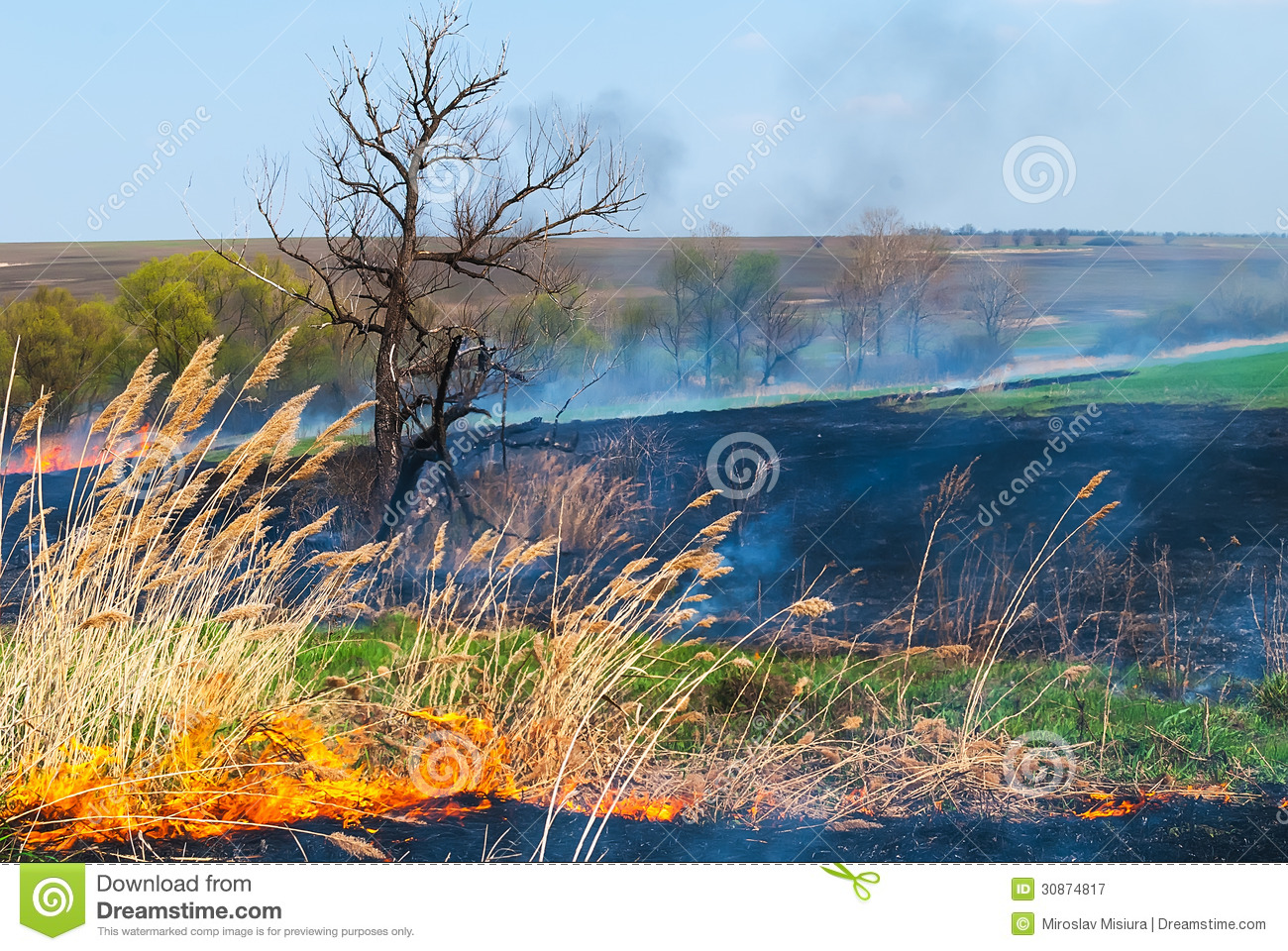 Fire on the field royalty free stock photography image for Local landscapers