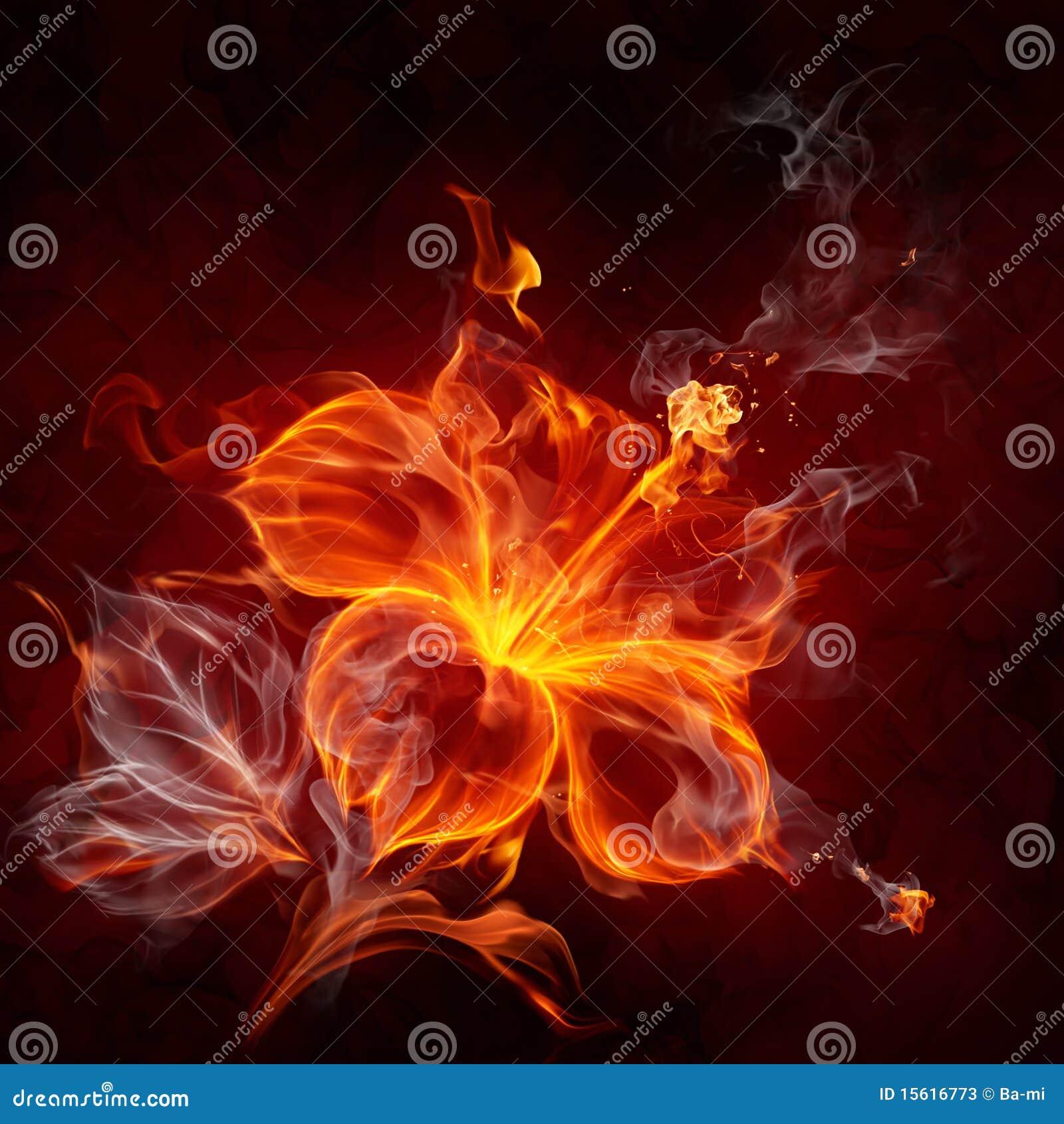 fire flower stock illustration illustration of burning