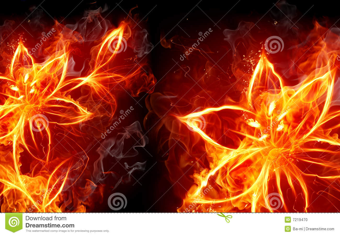Fire Lily Stock Photo ...