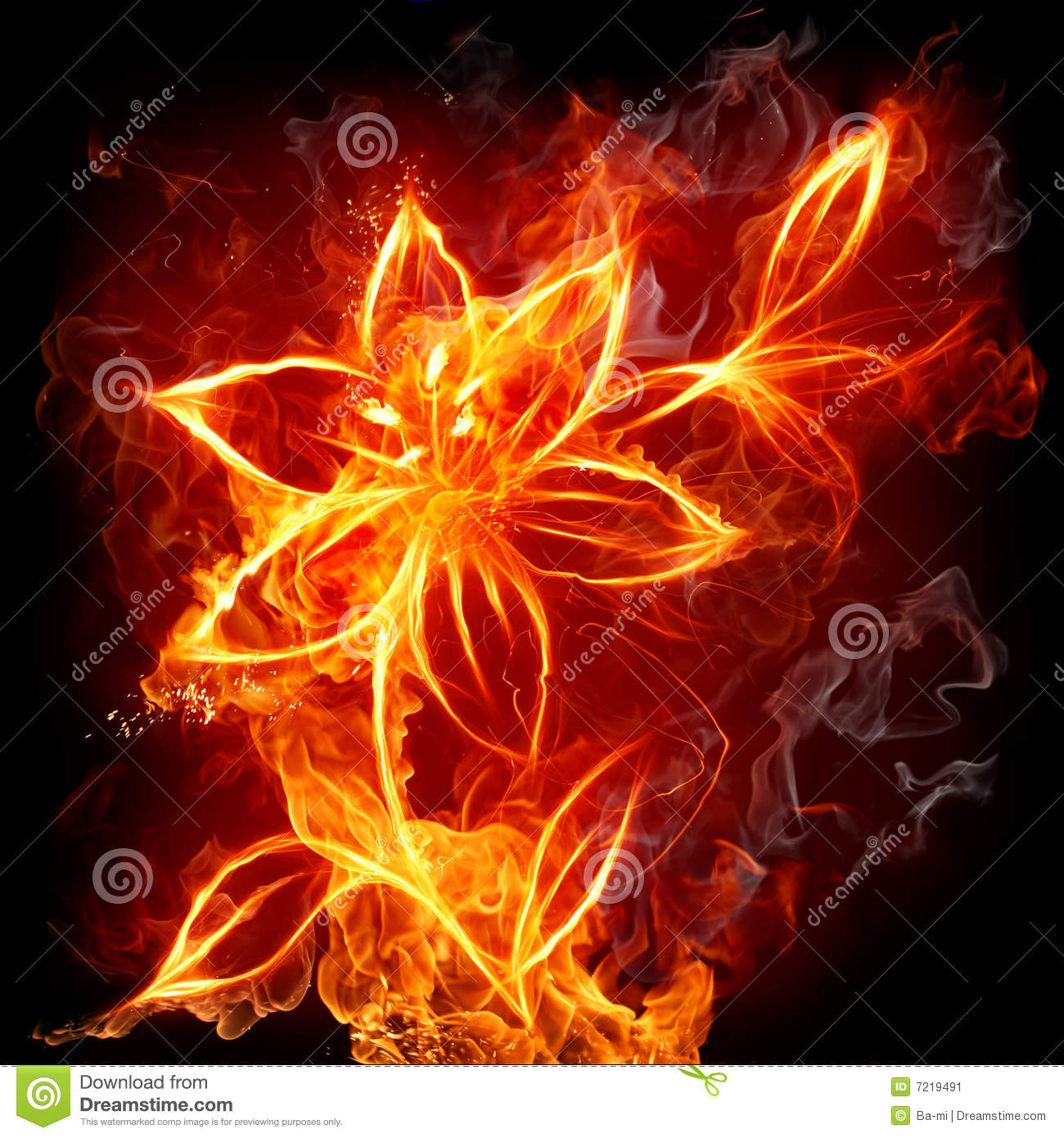 Fire Lily Stock Image Image 7219491