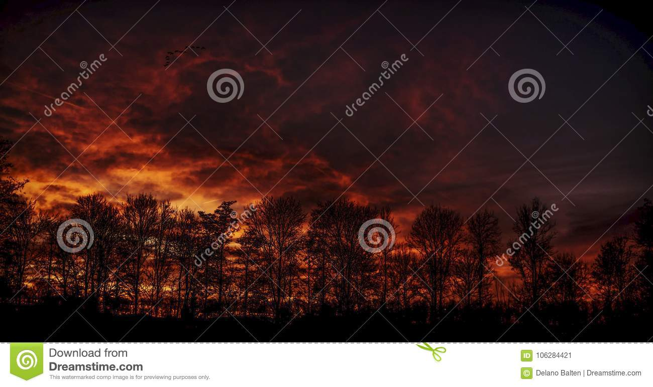 Fire Sky Burning over a Forrest