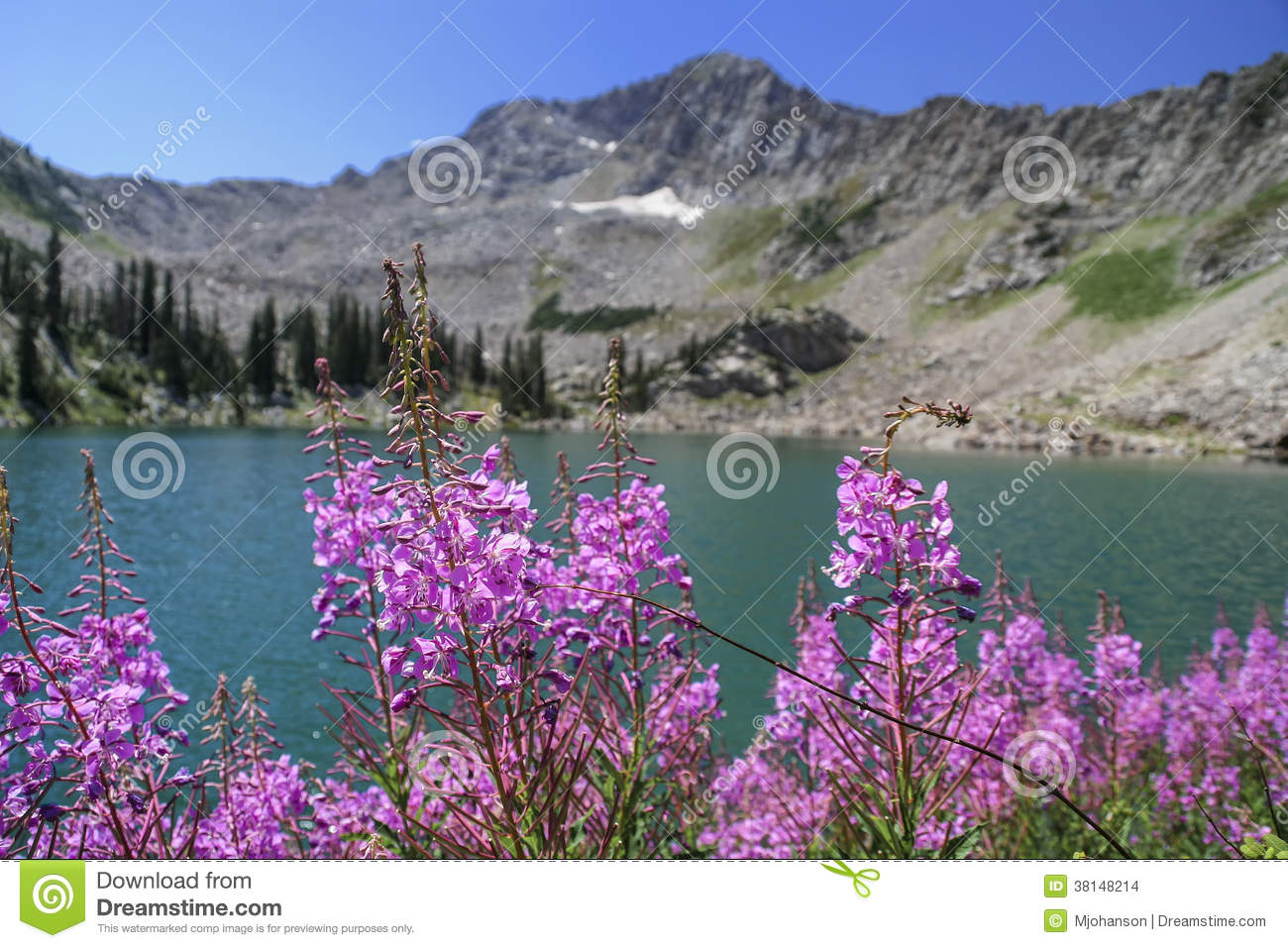Fire Weed and White Pine Lake