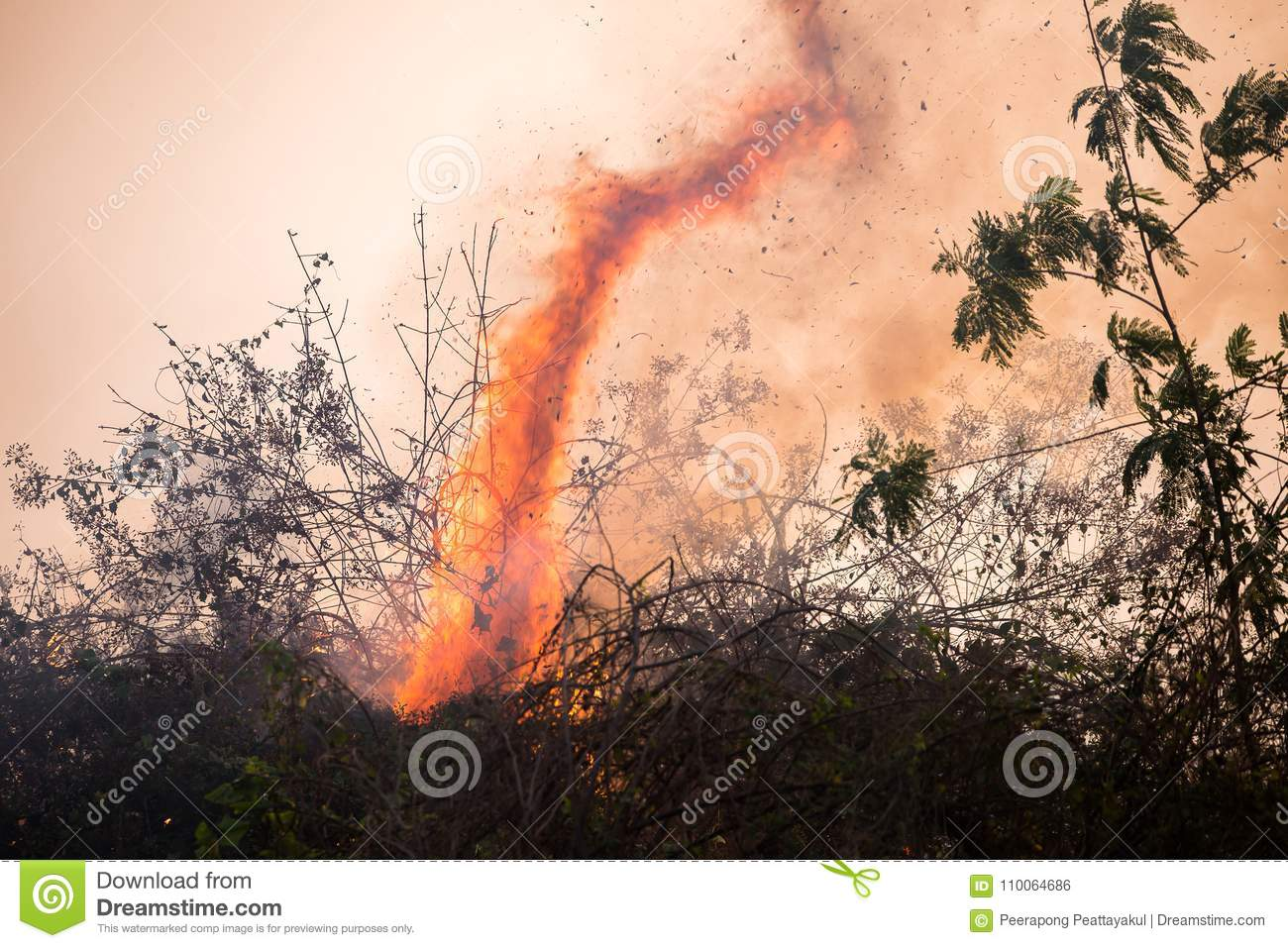 fire. wildfire, burning pine forest in the smoke and flames