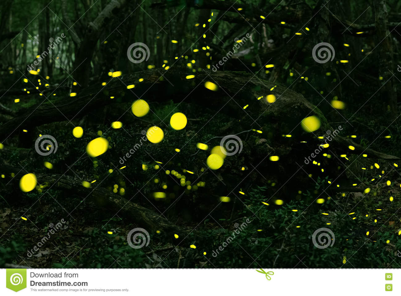 Fireflies at forest near Burgas, Bulgaria