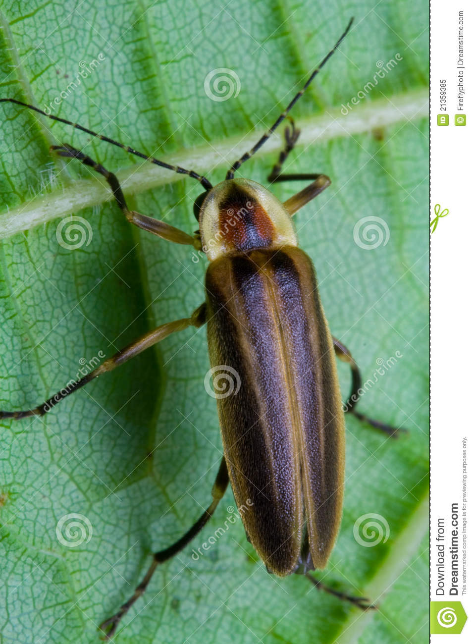 Luminous Insects Stock Photography 47392688