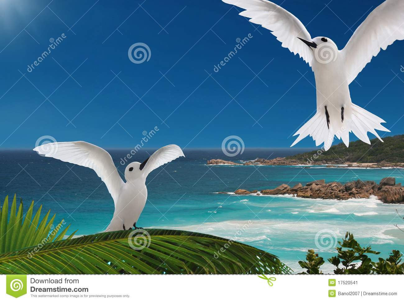 First flight. Birds, islands of Seychelles.