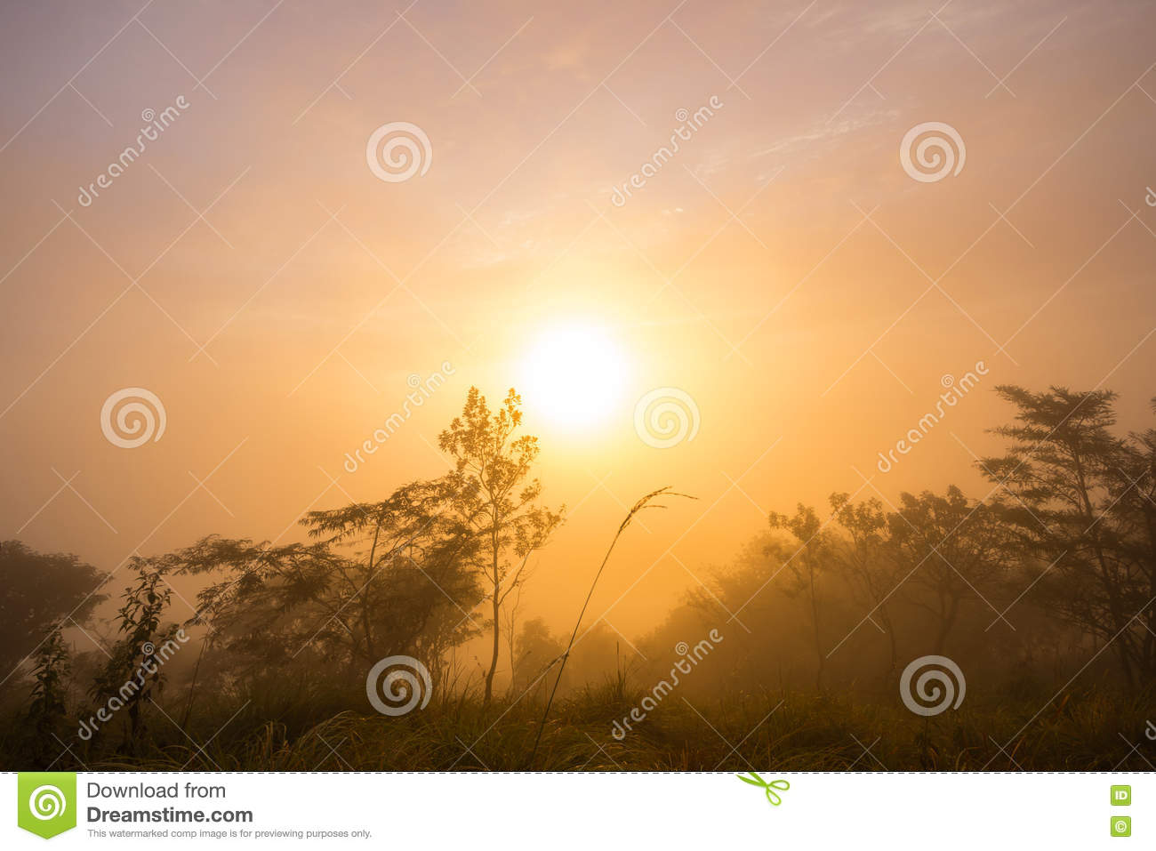 The first rays of the rising sun