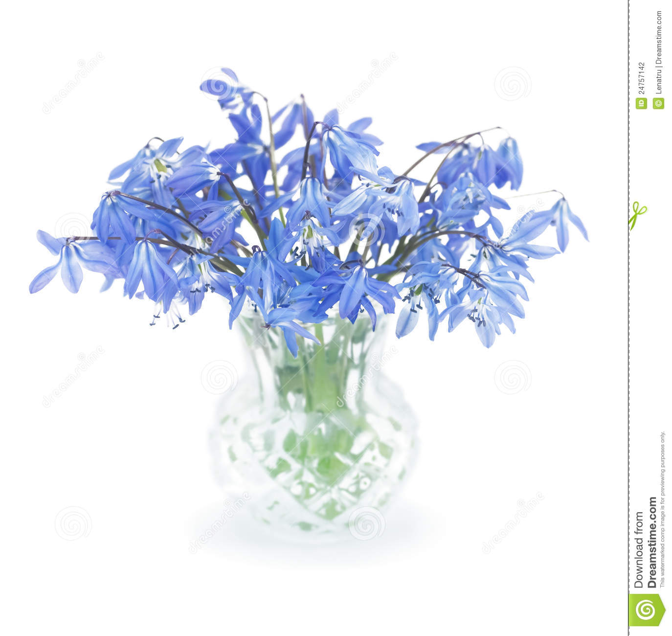 First spring blue flowers in a small vase stock photo image of first spring blue flowers in a small vase mightylinksfo
