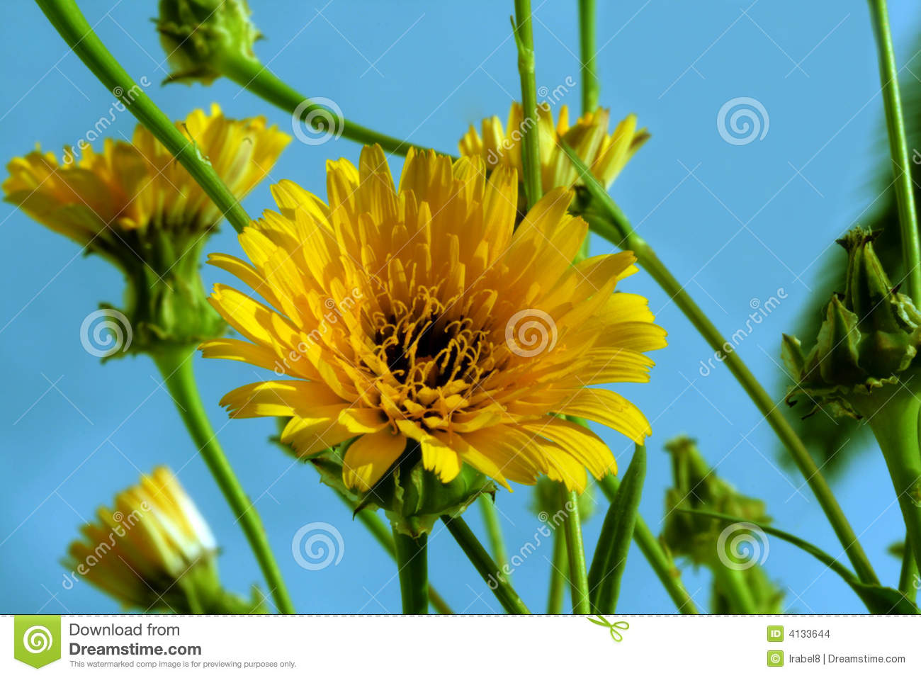 First Wild Spring Flowers Stock Photo Image Of Natural 4133644