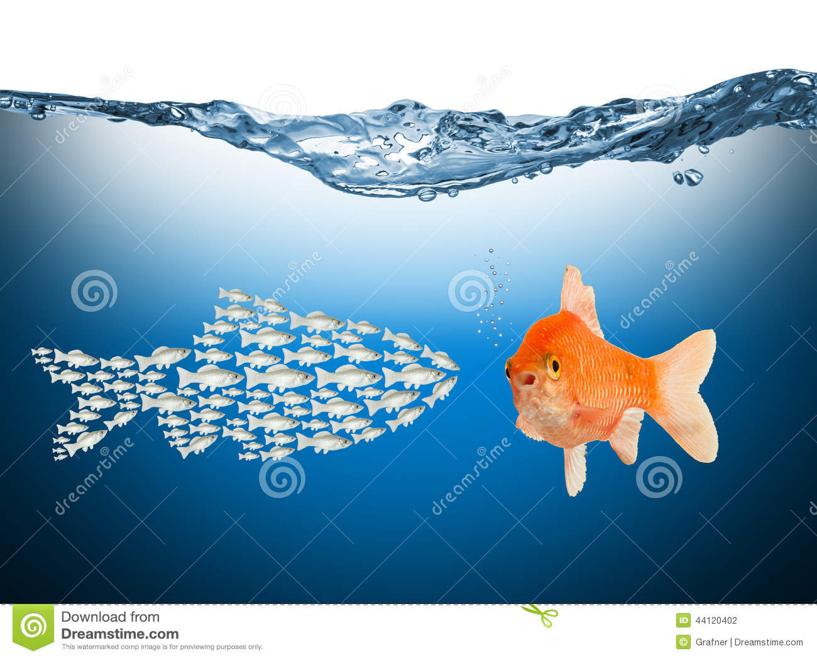 Fisch teamwork concept