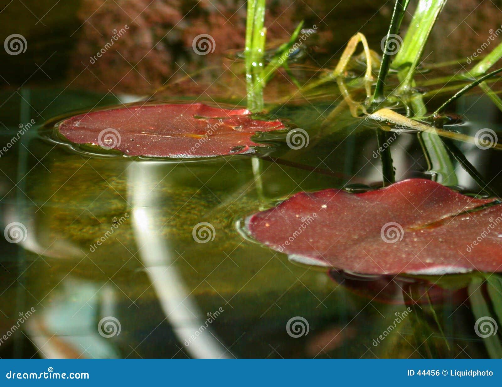 Fisch-Teich-Lilien-Auflagen
