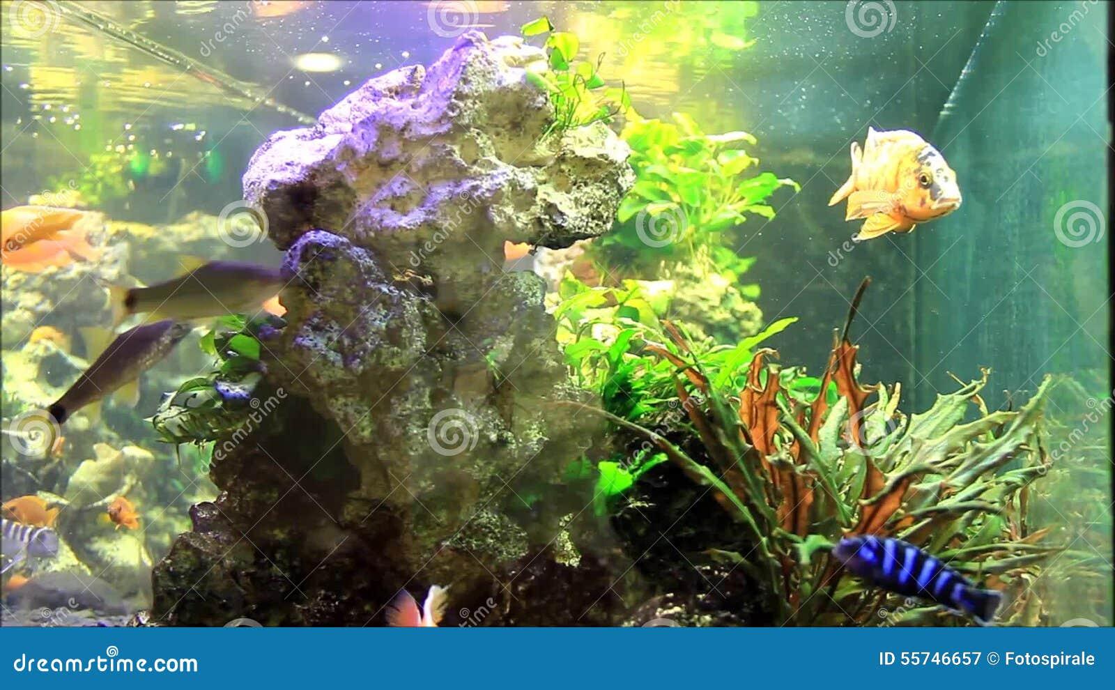 swasser aquarium fische good fische aquarium wasser fische fische fisch with swasser aquarium. Black Bedroom Furniture Sets. Home Design Ideas