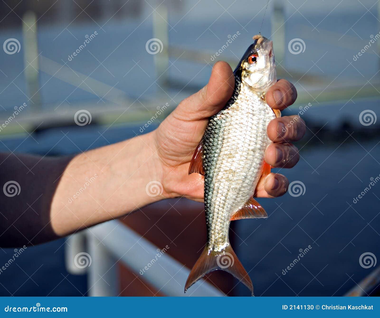 Fische in der Hand