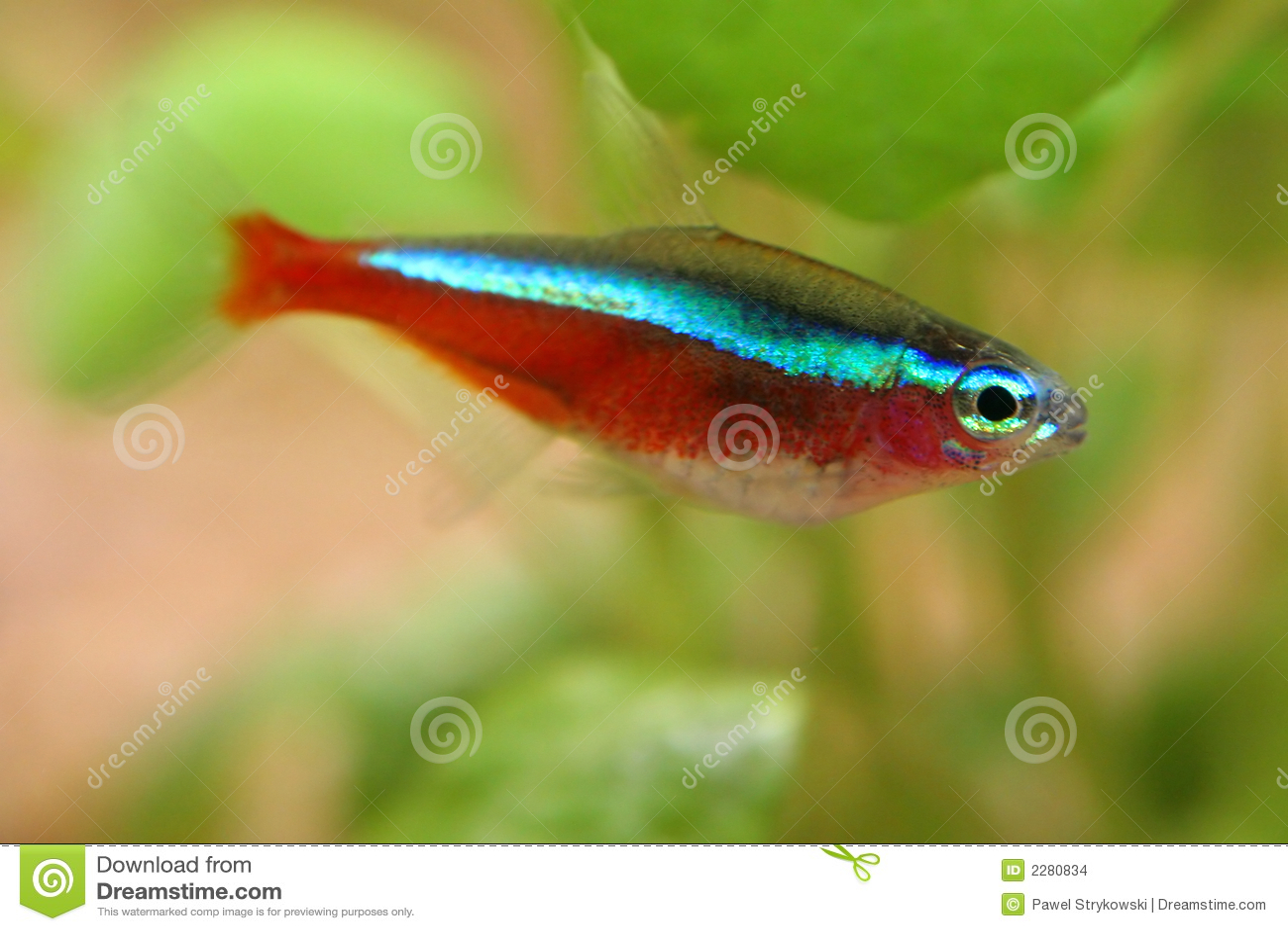 Fische im aquarium stockbilder bild 2280834 for Kleine fische