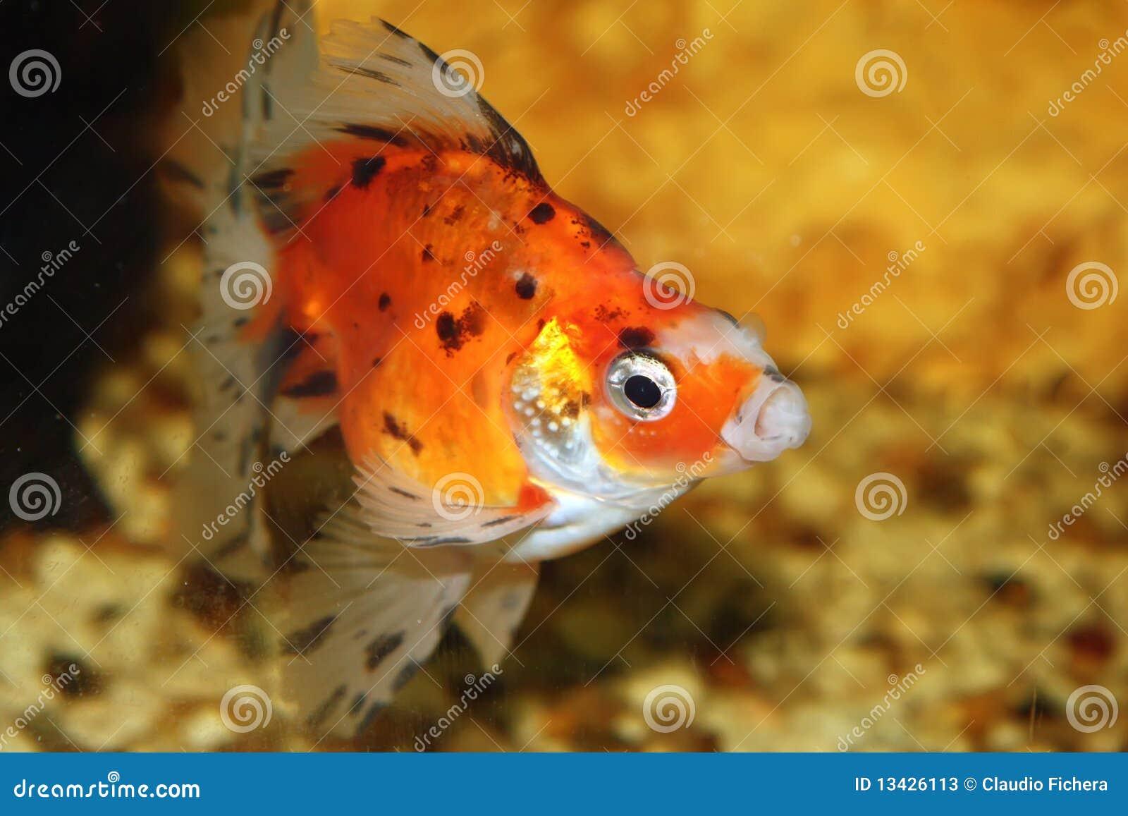 Fische im fishbowl 3